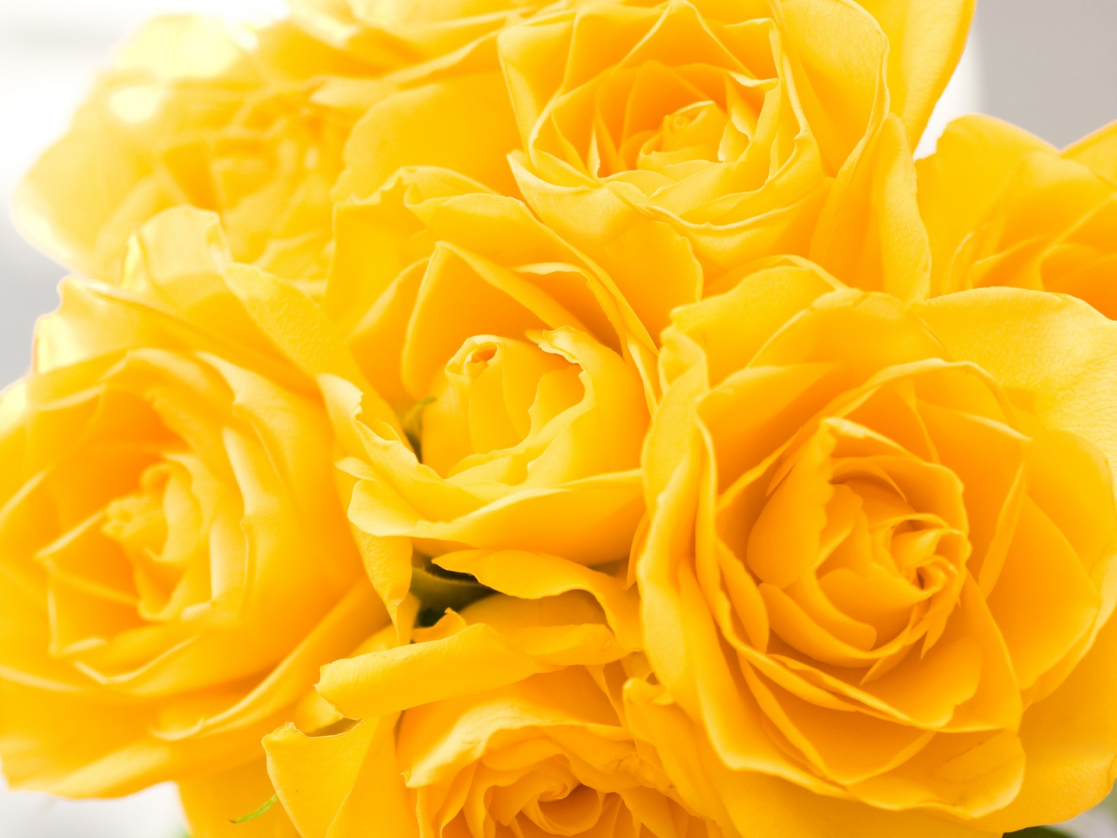 Gorgeous Yellow Flowers Wallpaper
