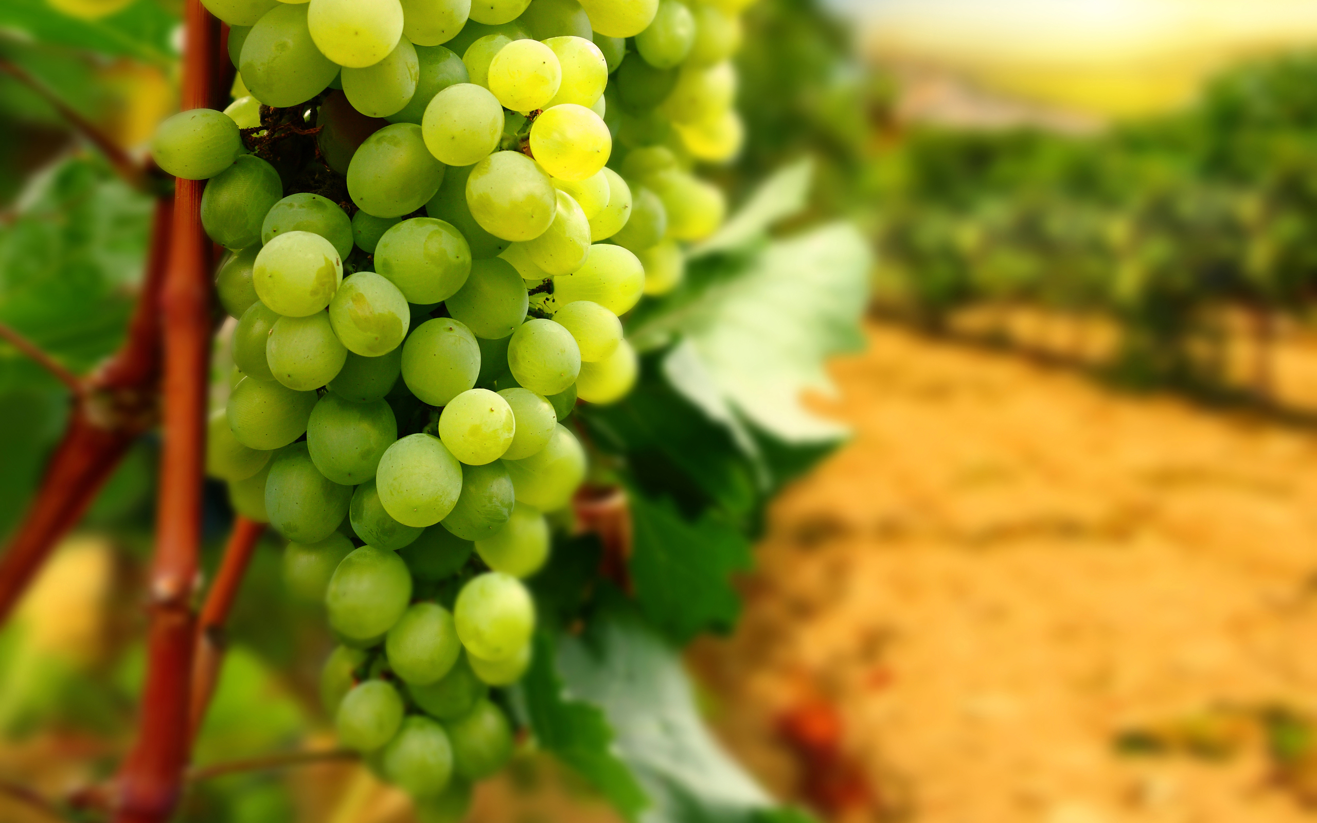 HD Wallpaper | Background ID:306895. 2560x1600 Food Grapes
