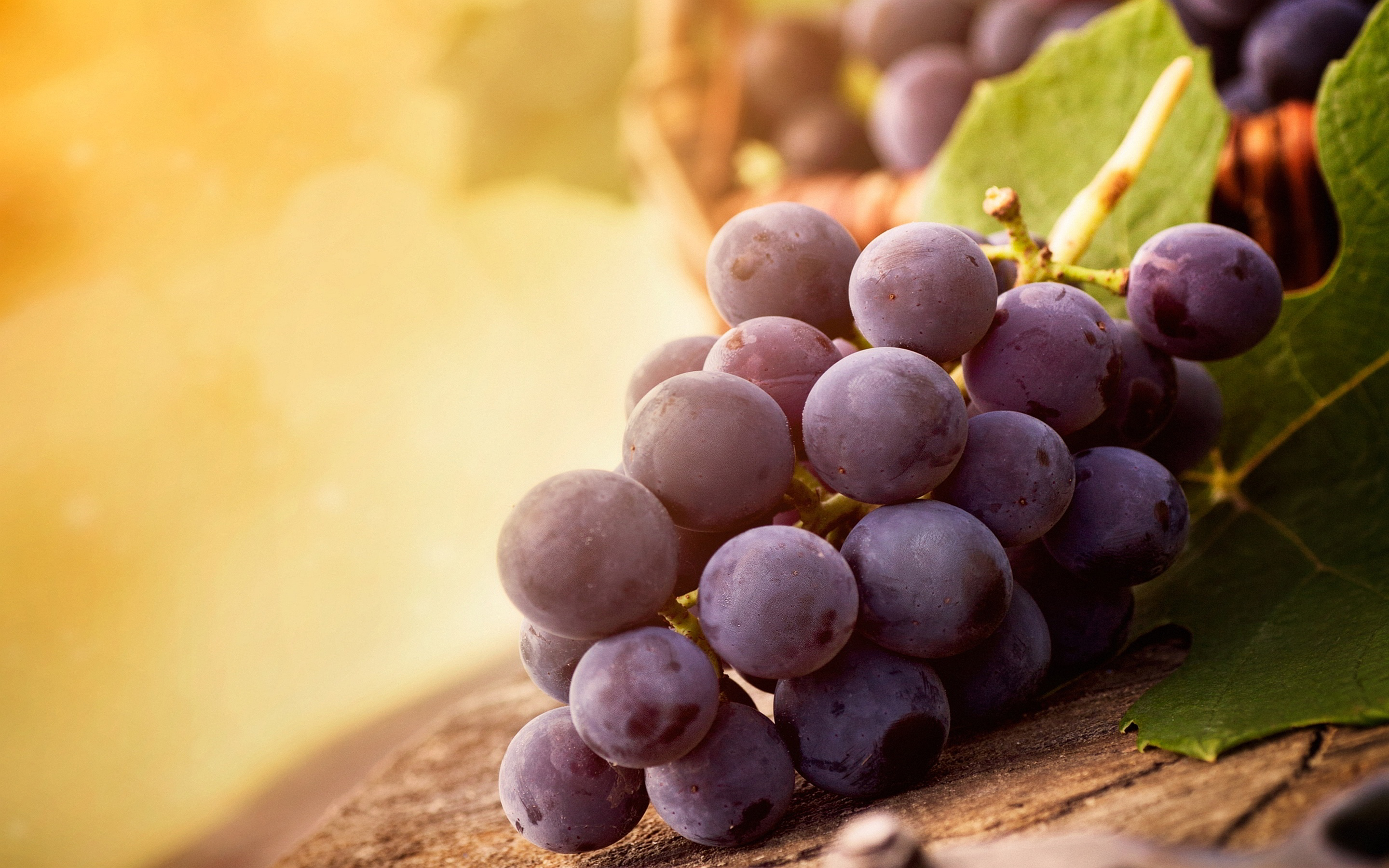 Fruit Grapes Wallpaper Desktop HD Image