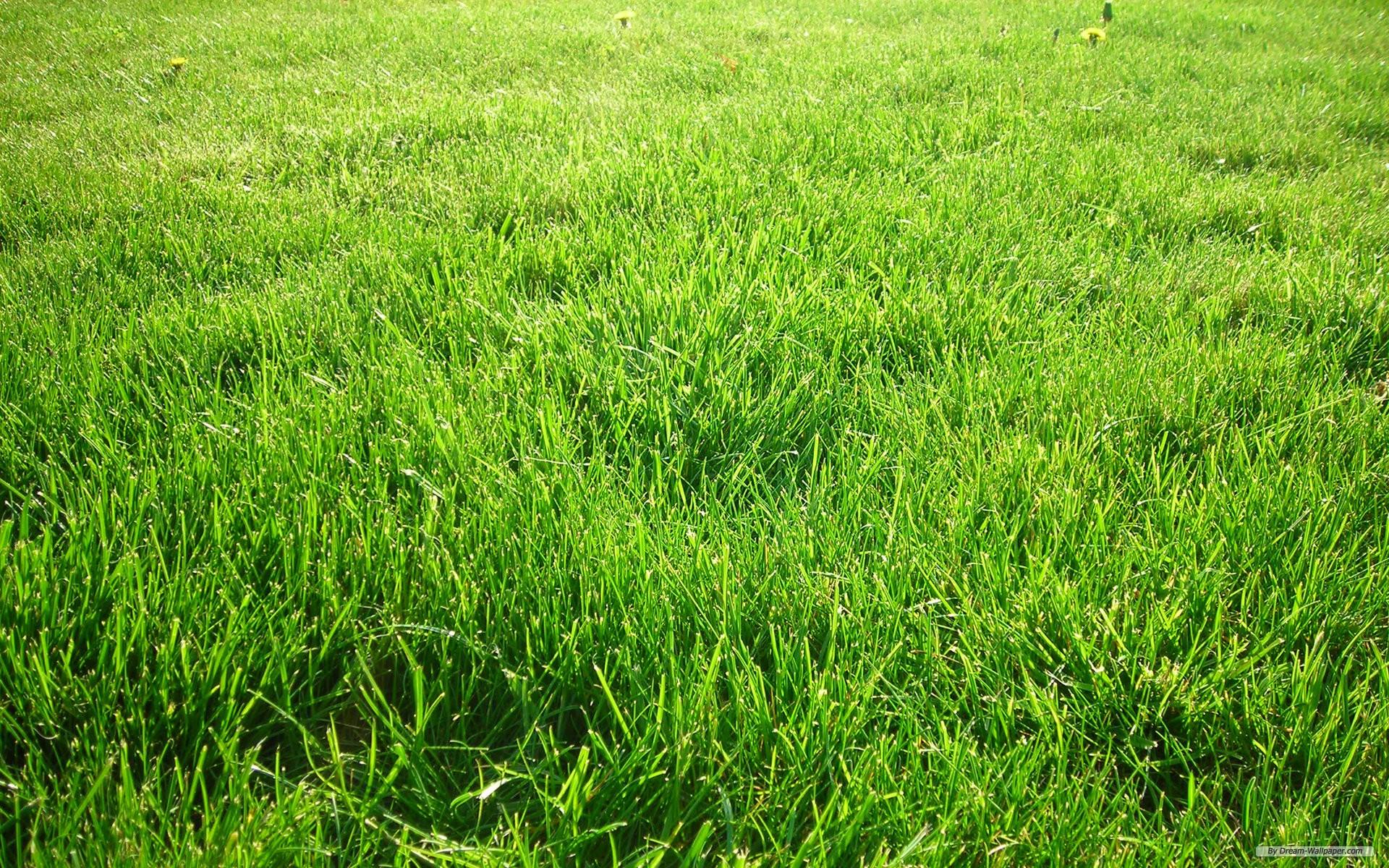 Free Nature Wallpaper Green Grass Wallpaper for PC