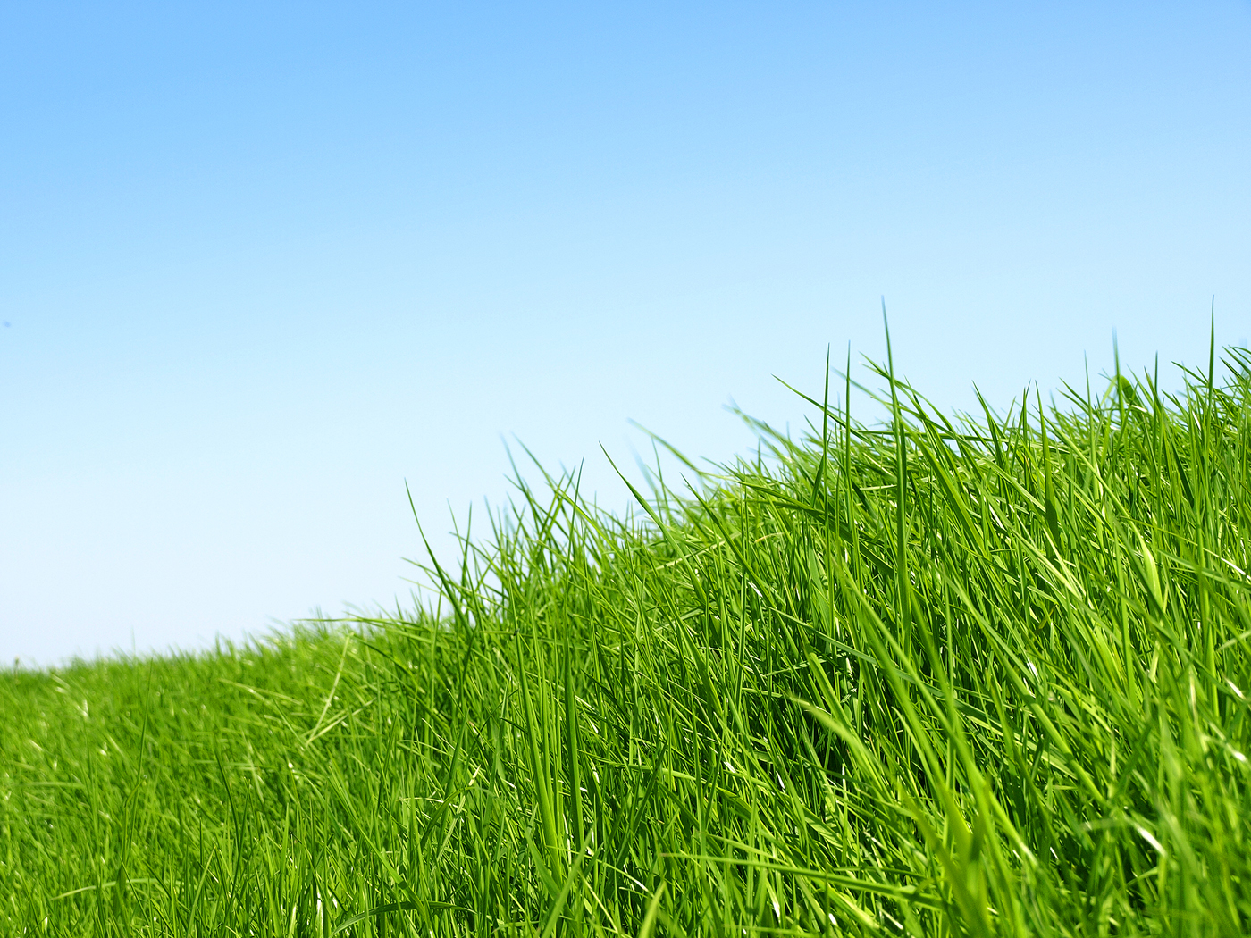 And the in-game grass is much greener than I remember it. I'm sure it's the same, but after that snow it's so bright and vivid. It's more like this: