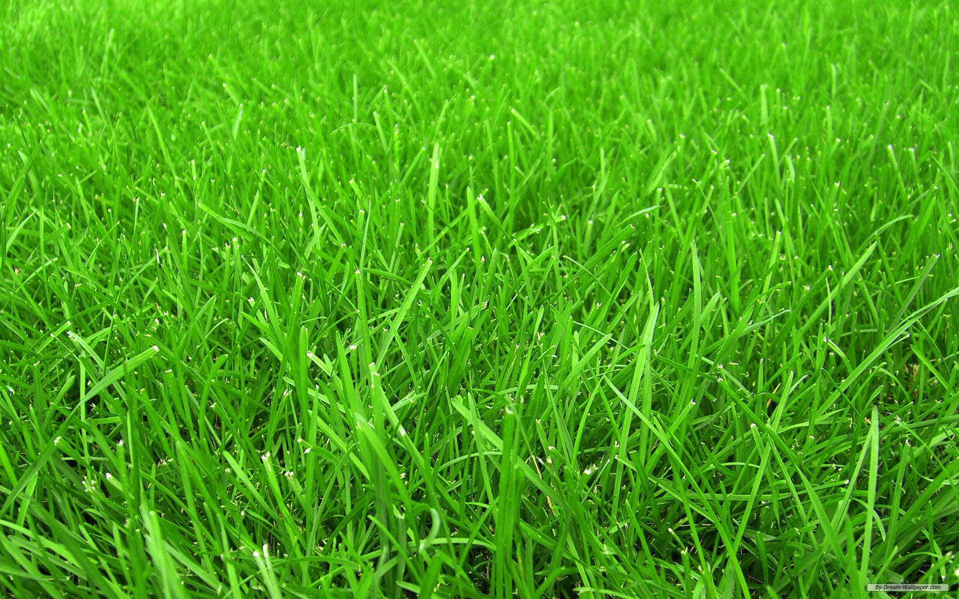 Grass Background 18876 2560x1600 px