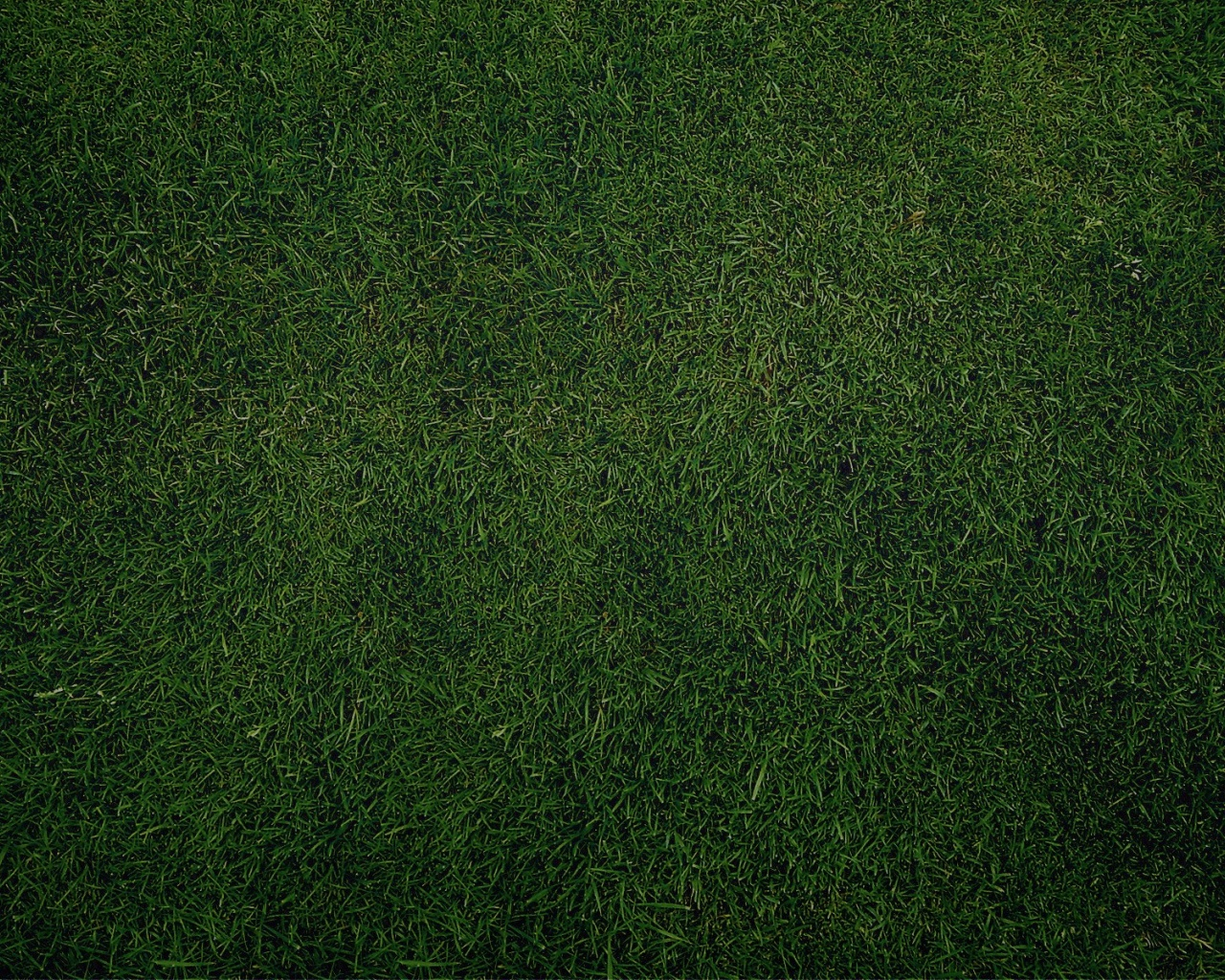 1280x1024 Green Grass Background