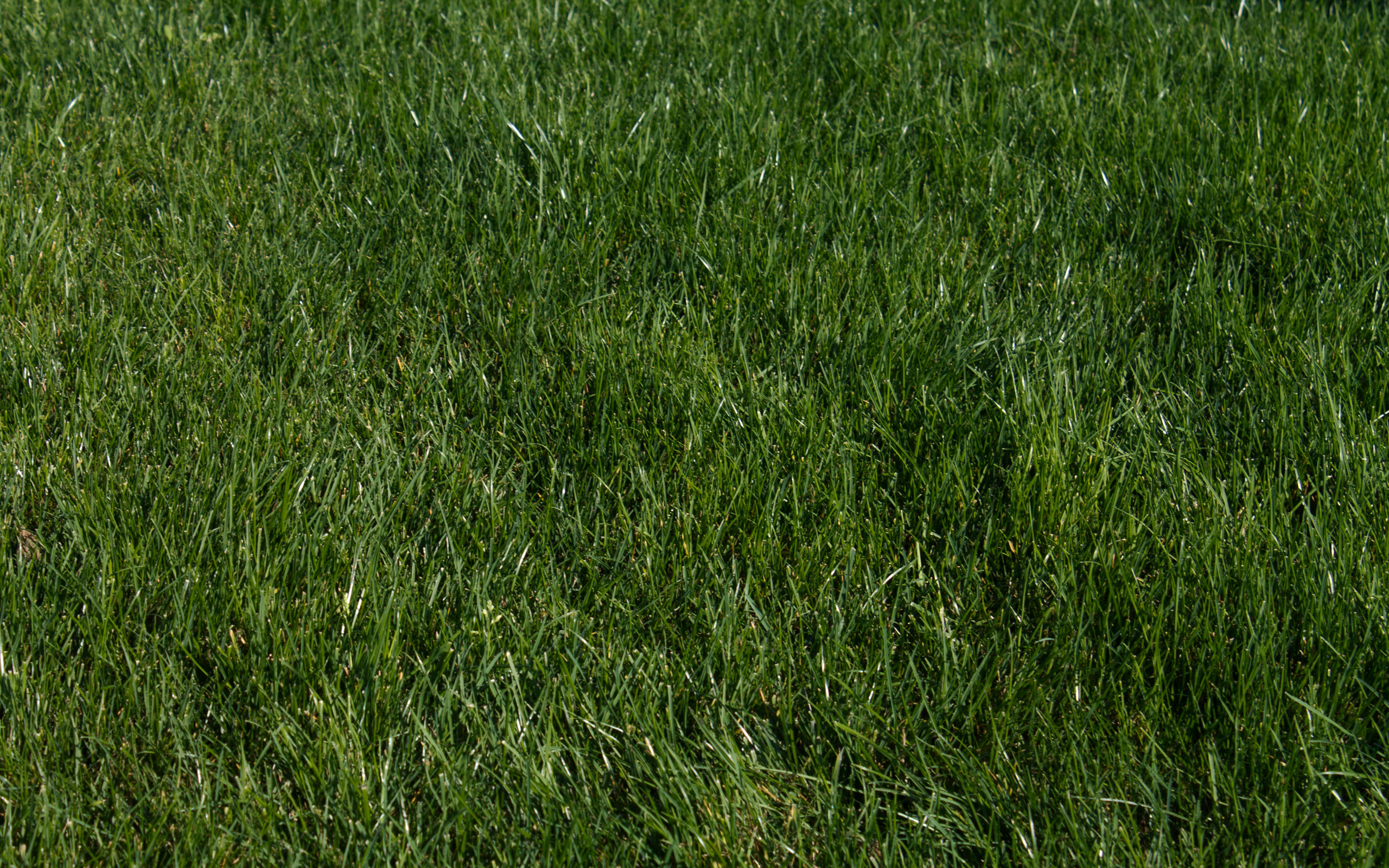 ... Green grass background 2560x1600