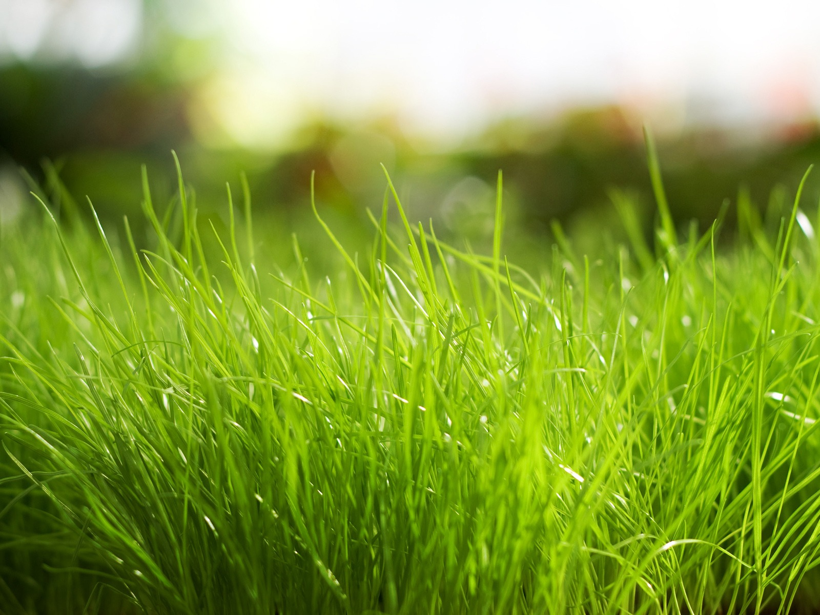 ... Green Grass Backgrounds for Presentations