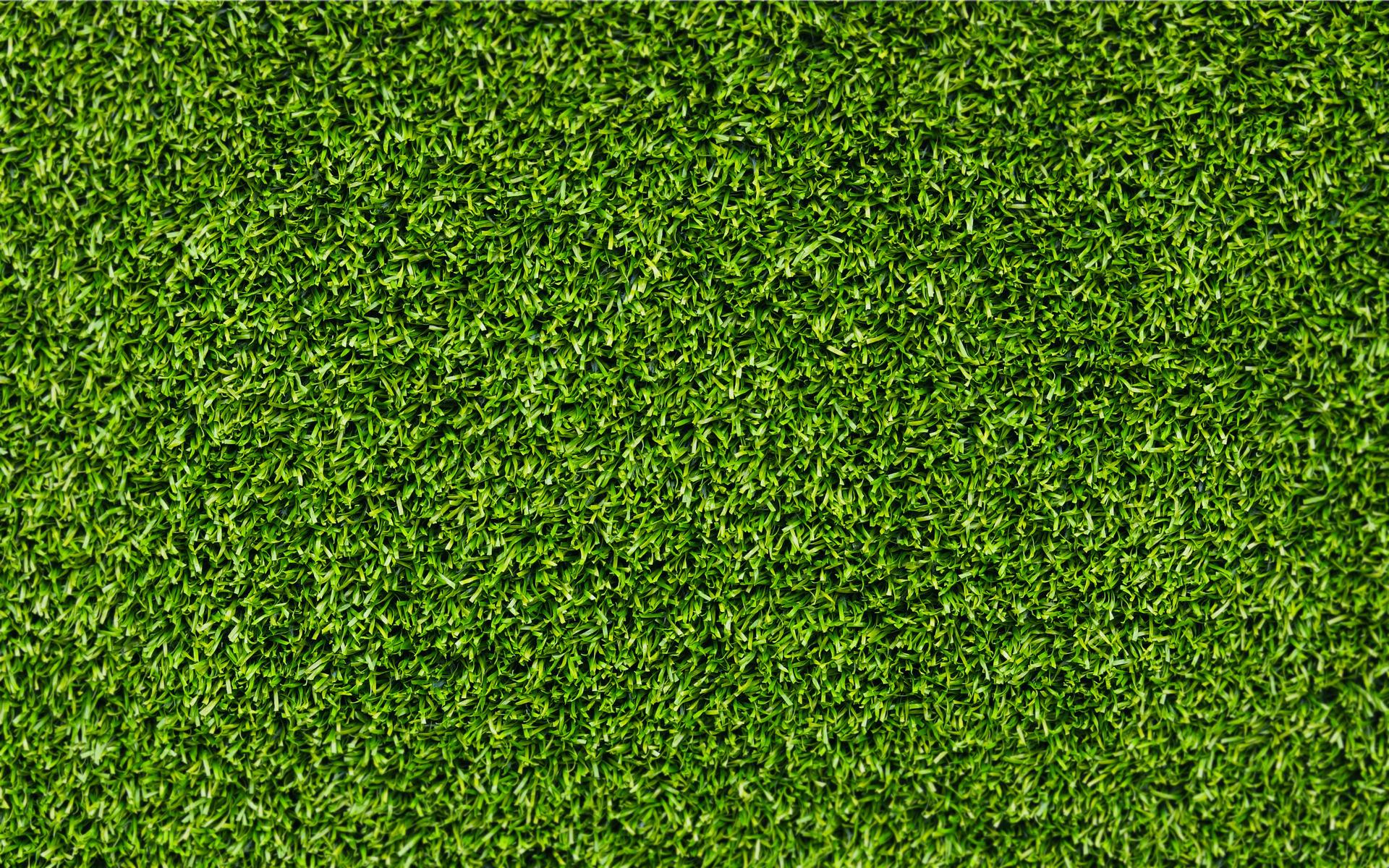 Download wallpaper: background Grass green, texture, desktop wallpapers, photo for design