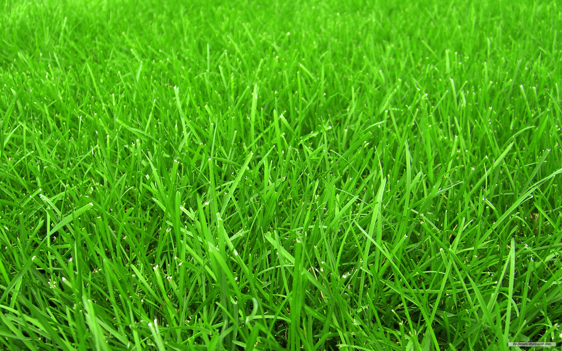 Green Grass Nature Wallpaper for Desktop Background