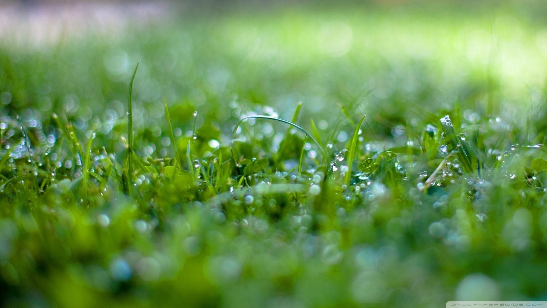 1920x1080 Wet Grass Bokeh 2 wallpaper
