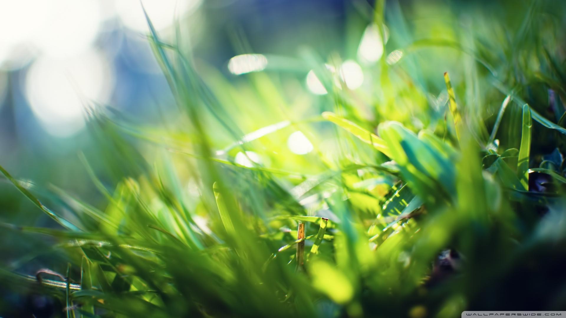 Grass Bokeh 33924 2560x1400 px