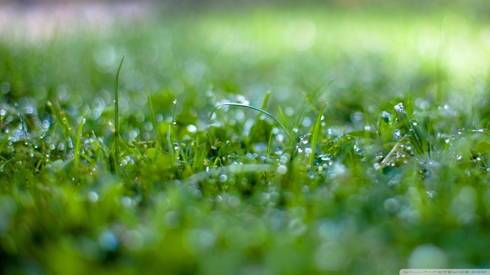 1920x1080 Wet Grass Bokeh 2 wallpaper