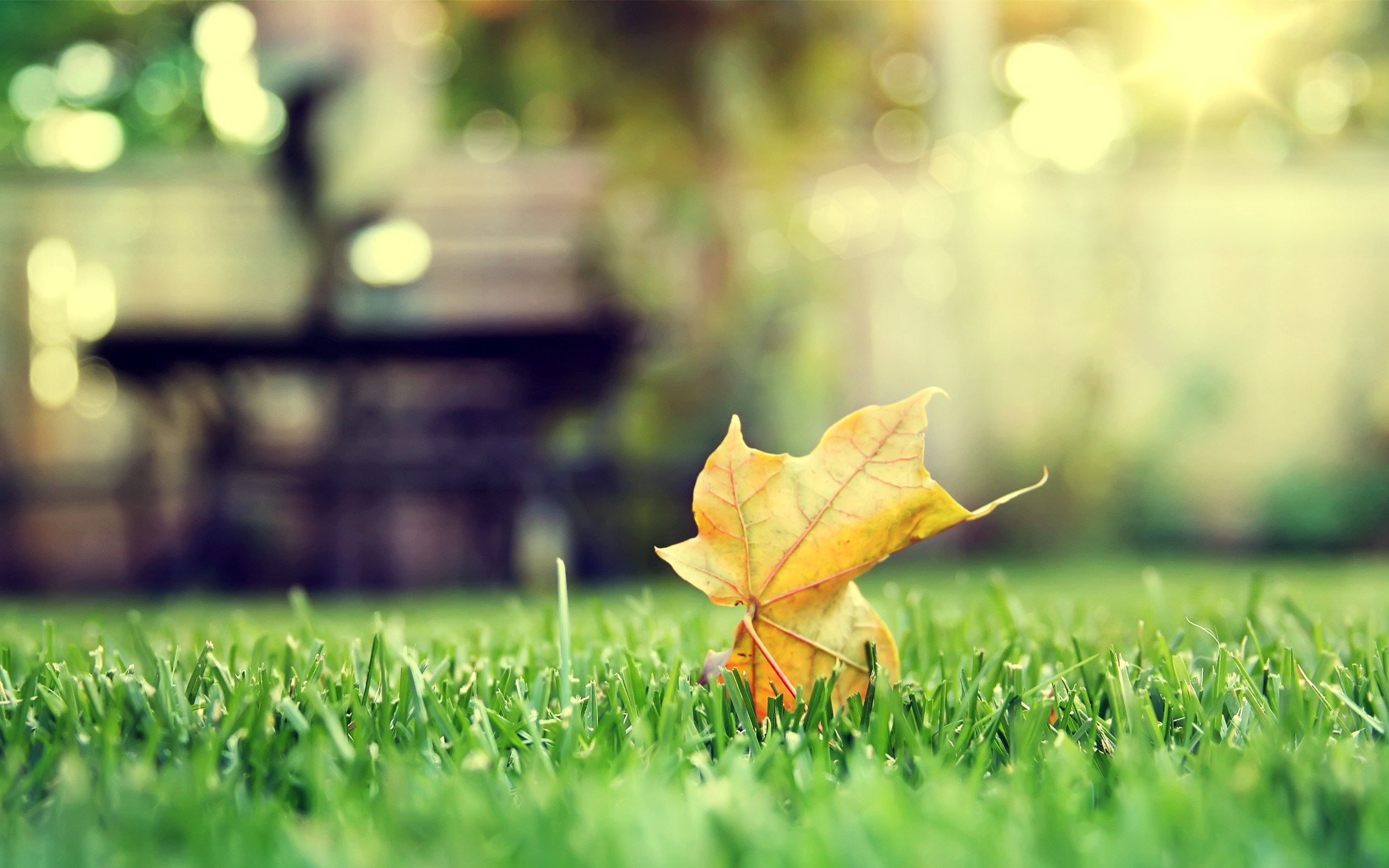 lonely dry leaf green grass bokeh wide hd wallpaper is a lovely background.
