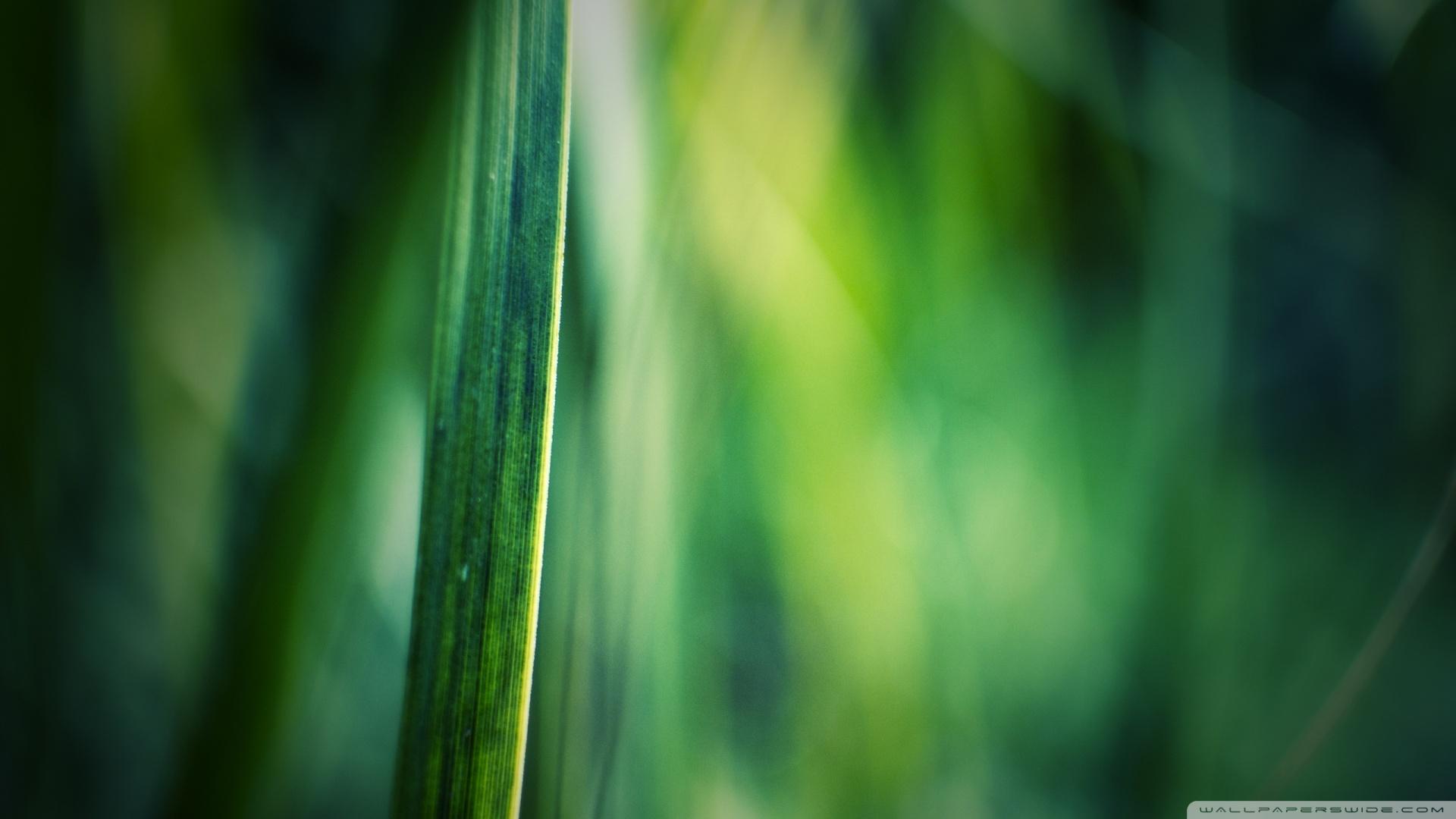 Grass Bokeh Wallpapers