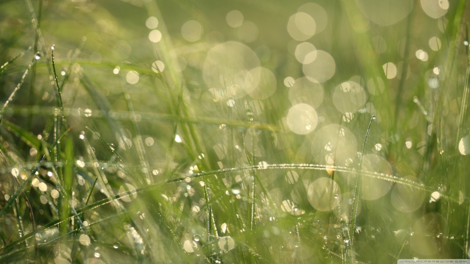 Grass Bokeh Wallpapers