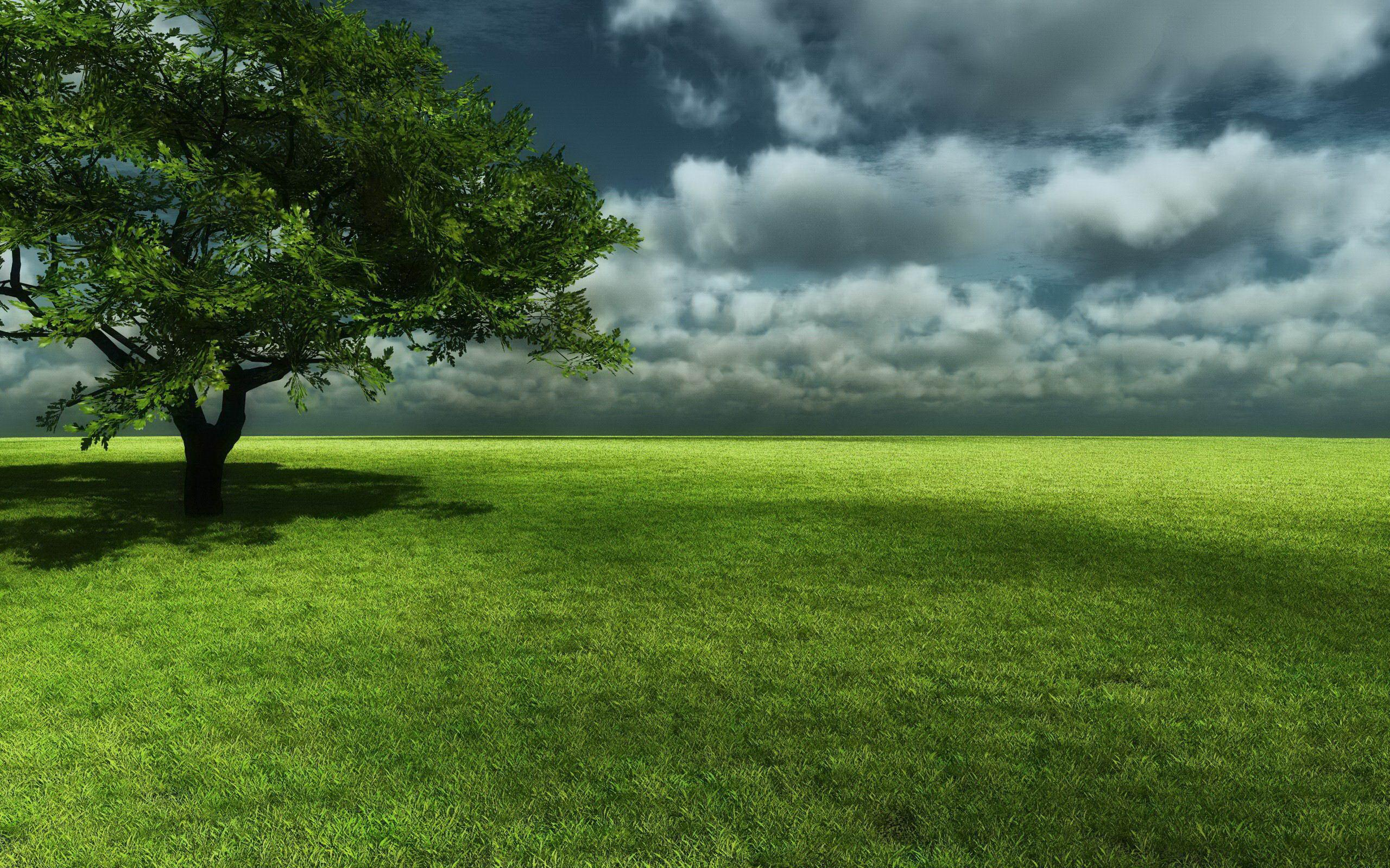 Grass Landscape Background