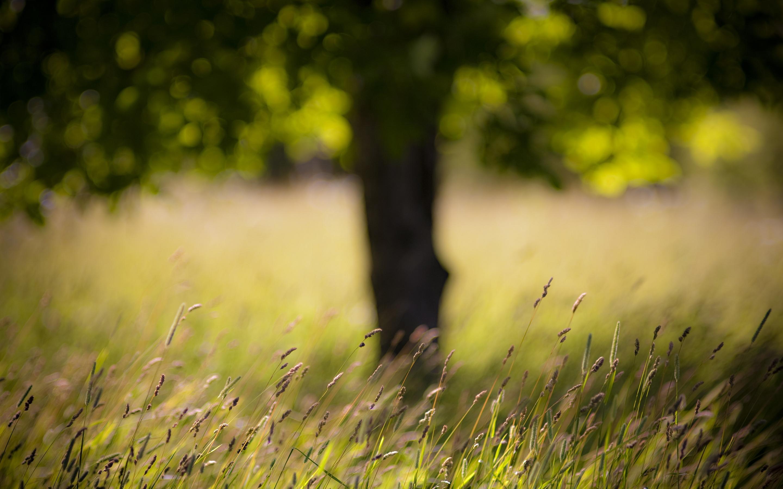 Grass late summer