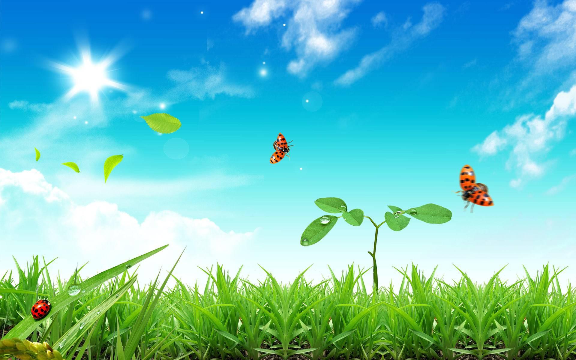 ... Next Wallpaper : nature grass bugs photomanipulation wallpaper