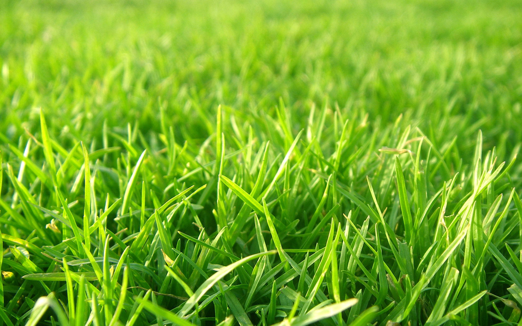 Grass Pictures