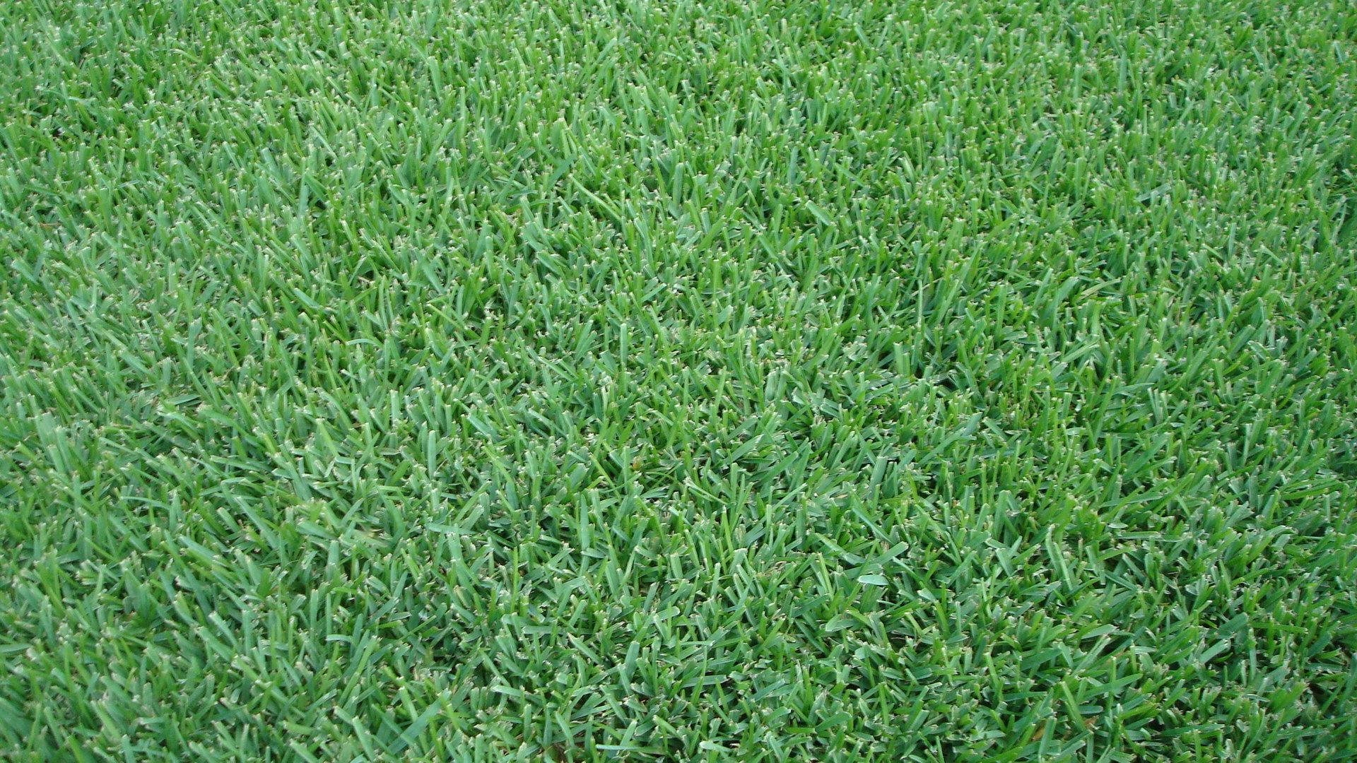 ... Grass.jpg