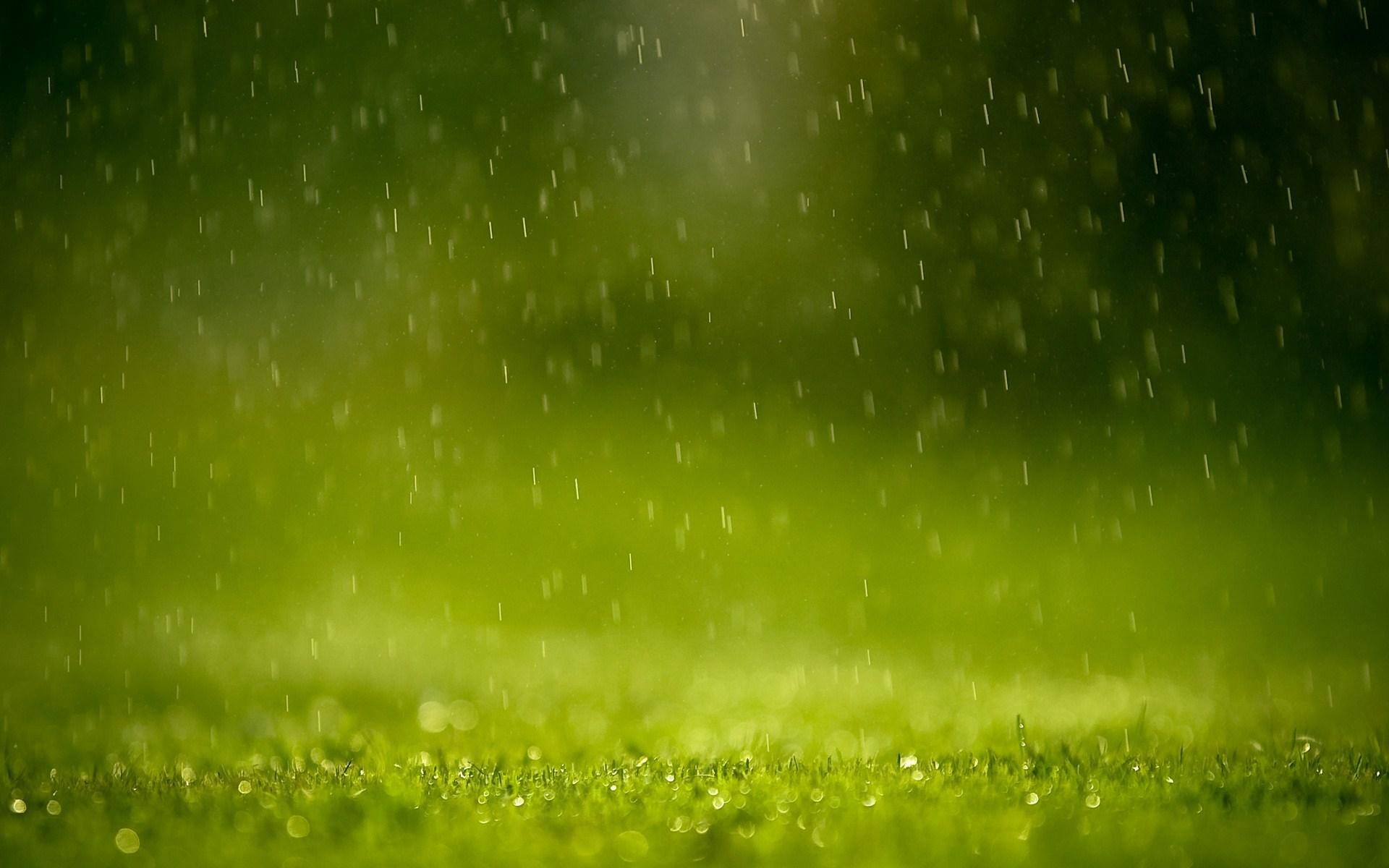 Grass Rain Drops Nature