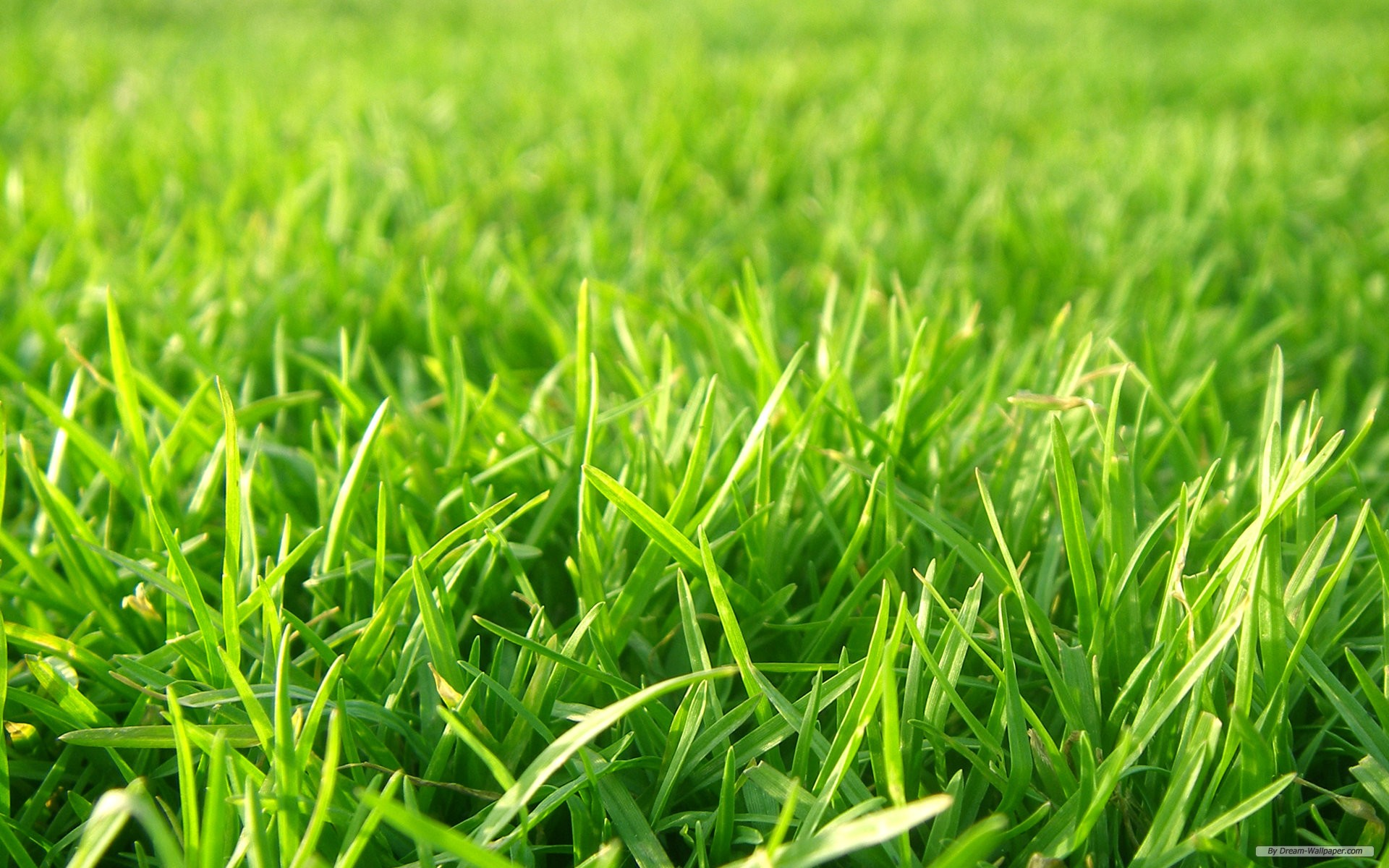Grass Wallpaper
