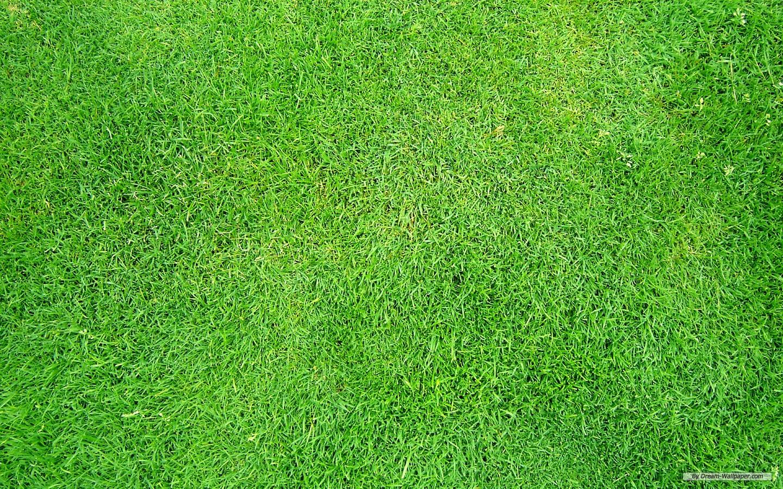 Grass Wallpaper 03