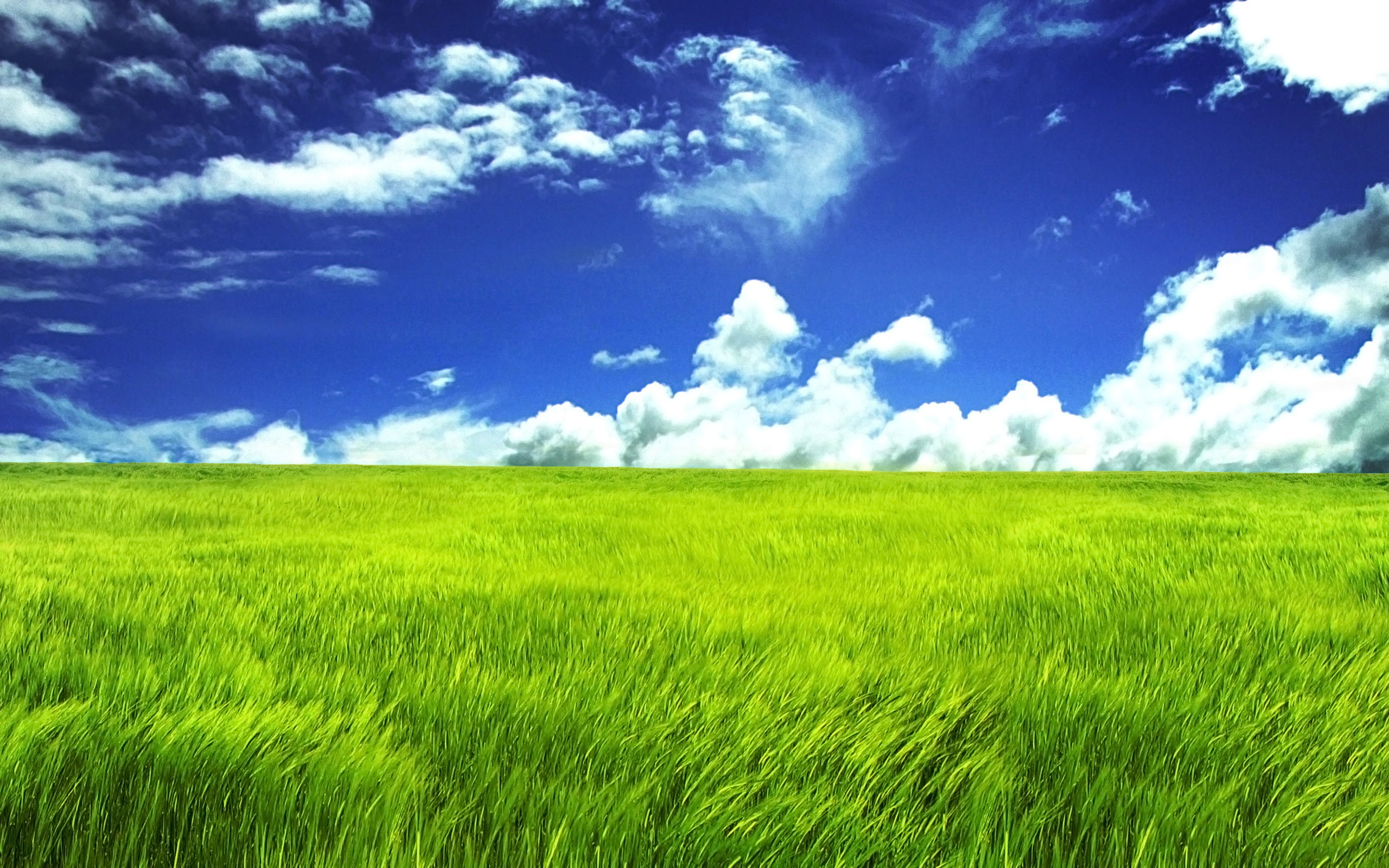 Grasslands Background