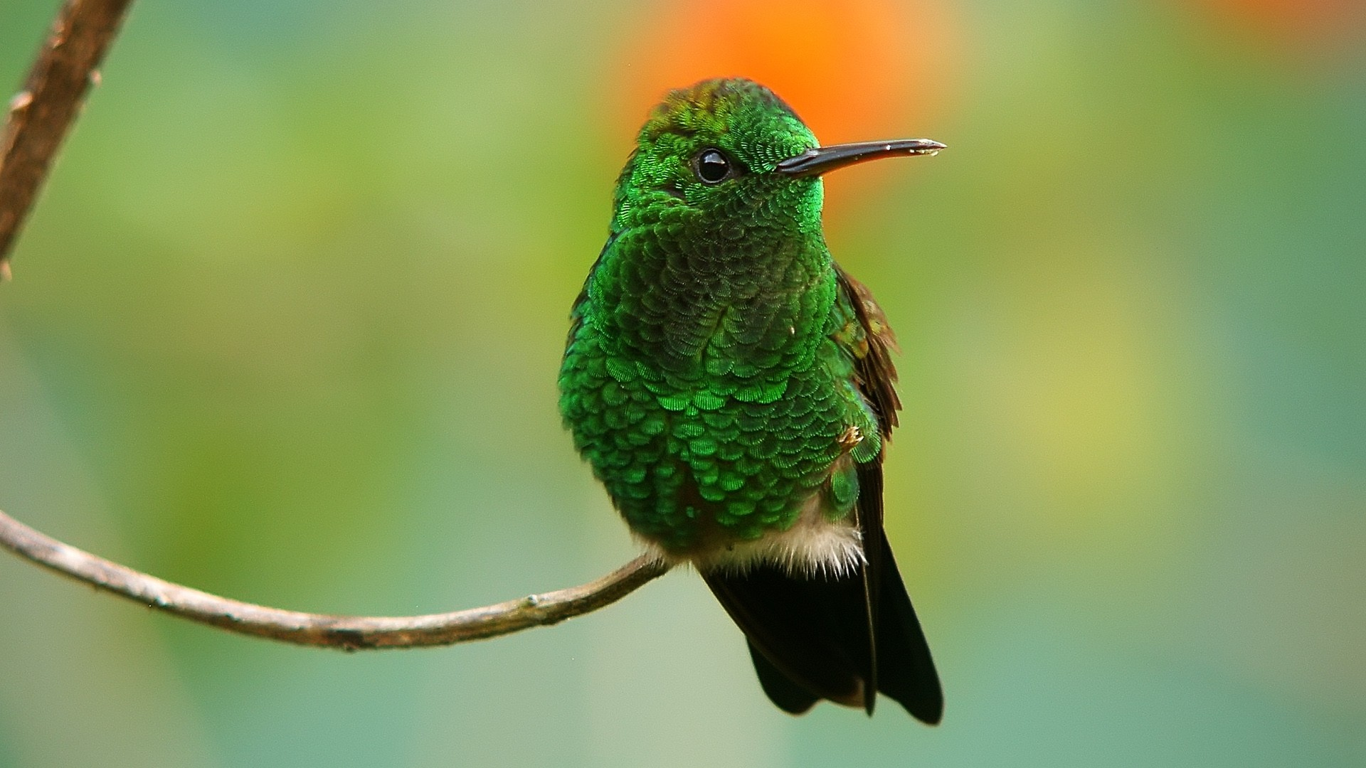 green bird wallpaper (9)