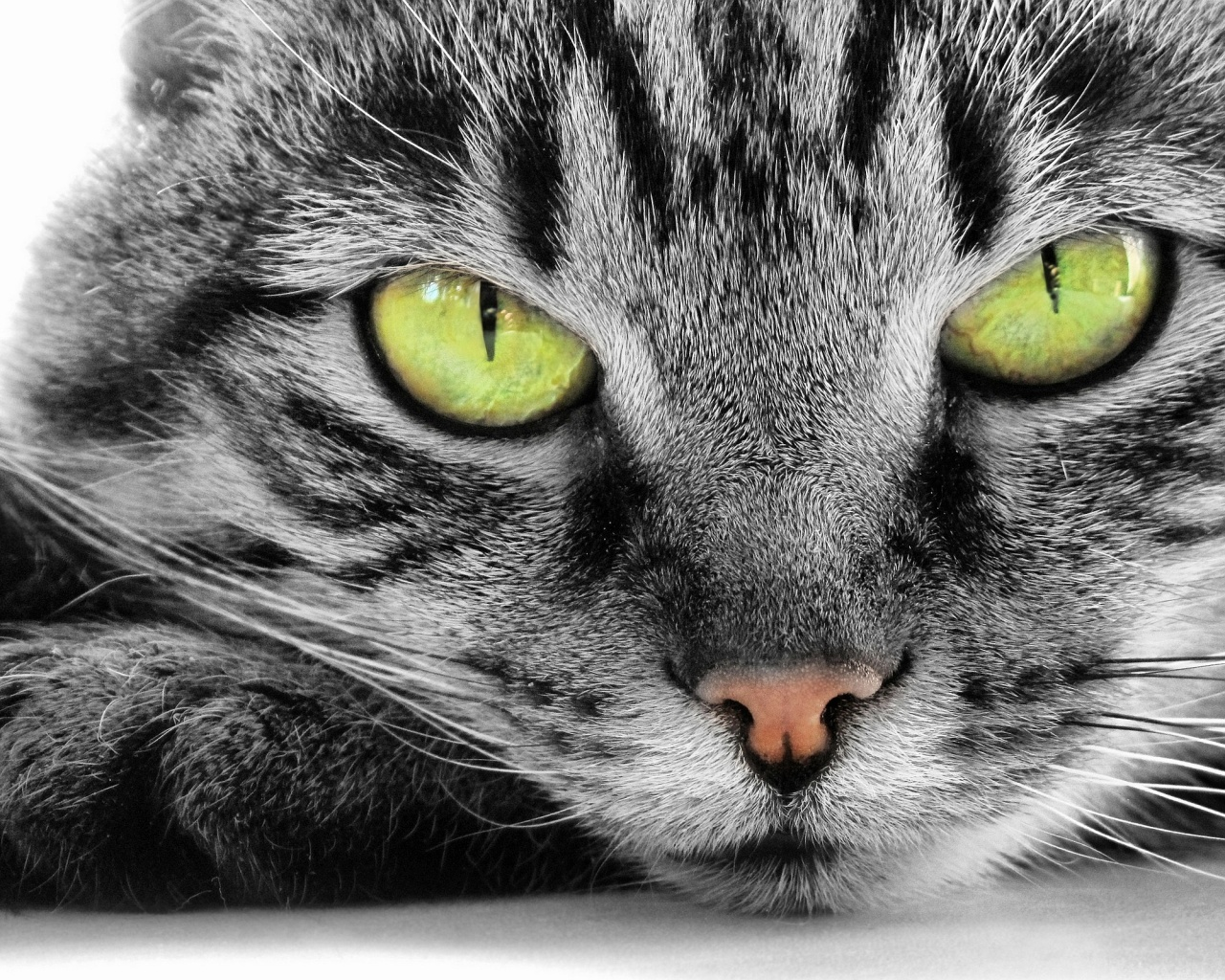 Description: The Wallpaper above is Green Eye Cat Wallpaper in Resolution 1280x1024. Choose your Resolution and Download Green Eye Cat Wallpaper
