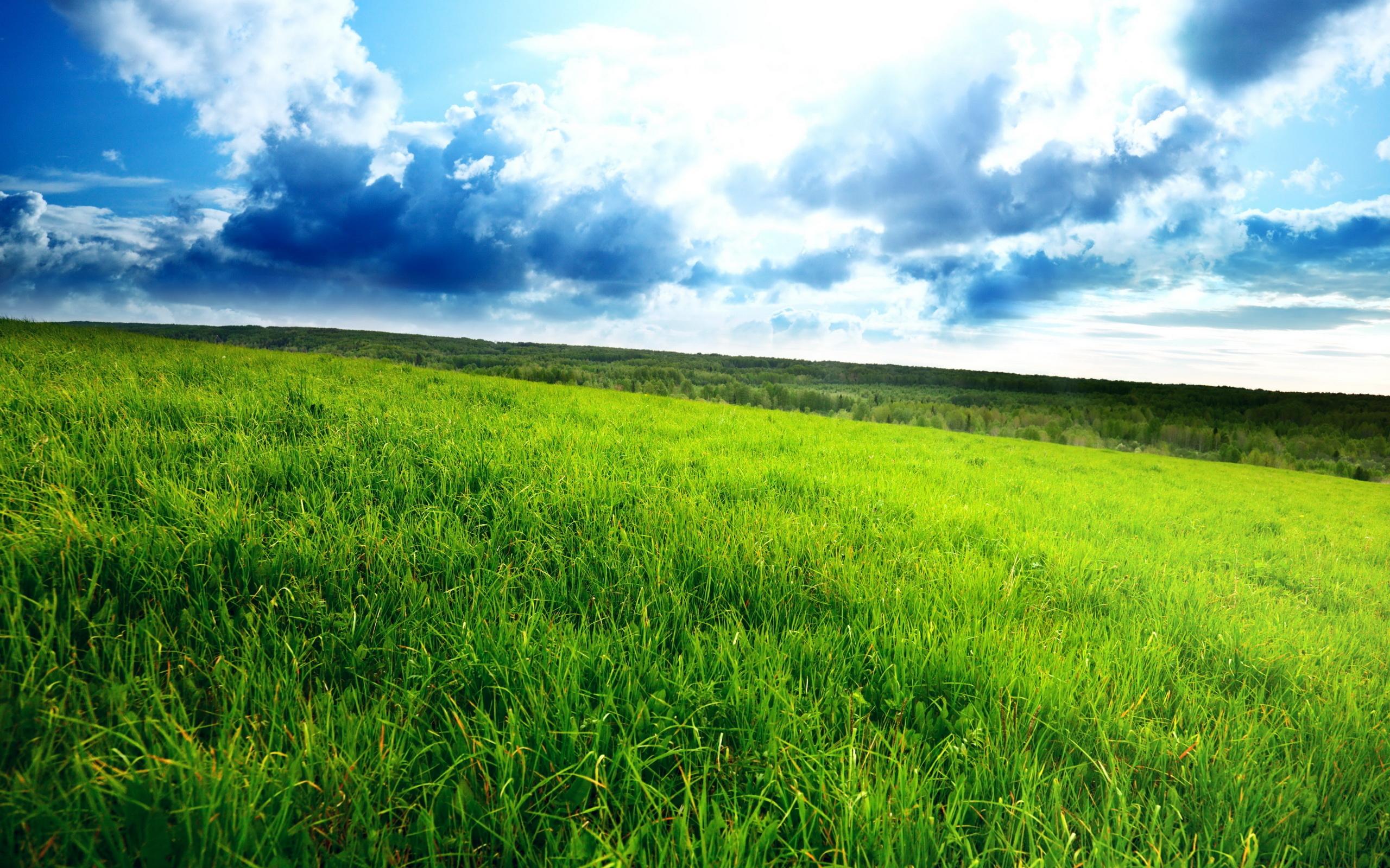 Green Field 2560x1600