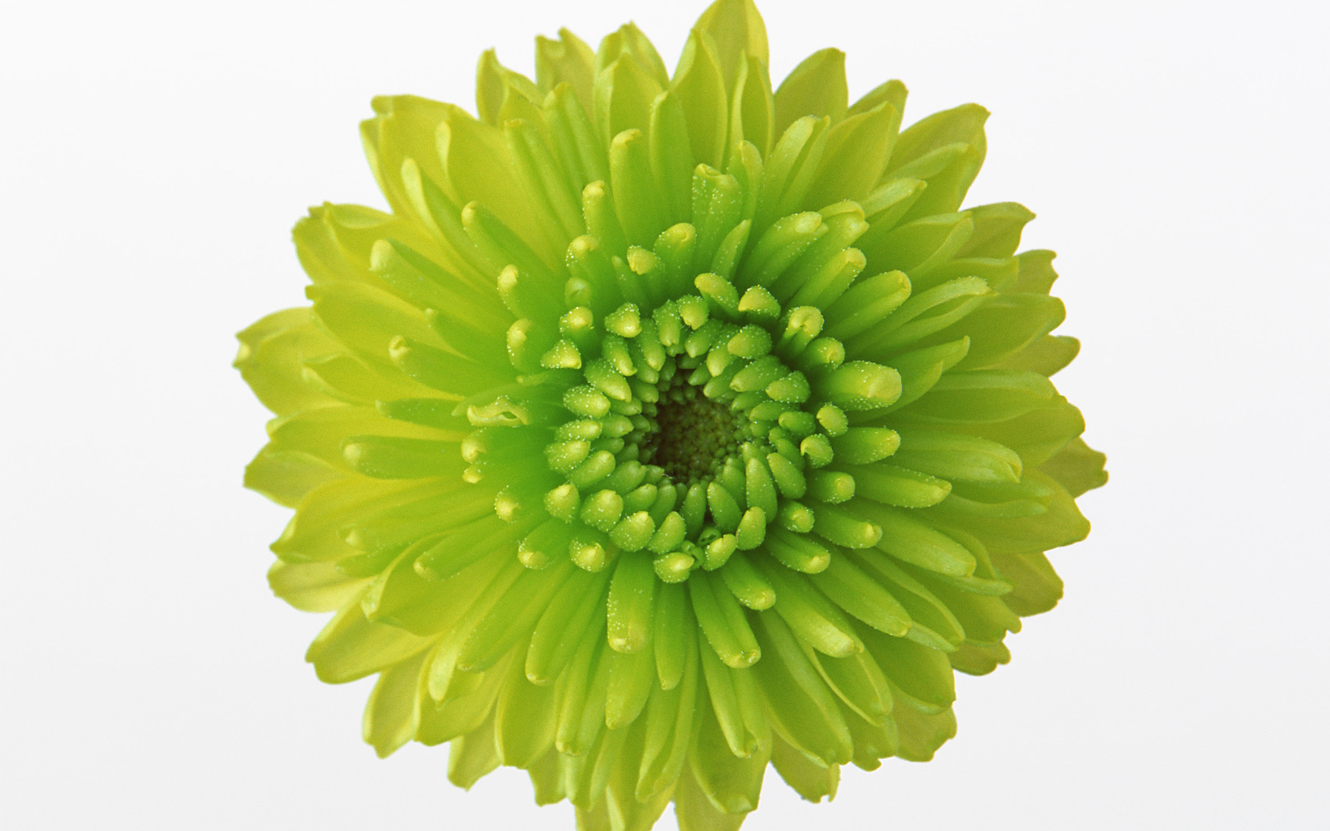 DOWNLOAD WALLPAPER Green Flowers - FULL SIZE ...
