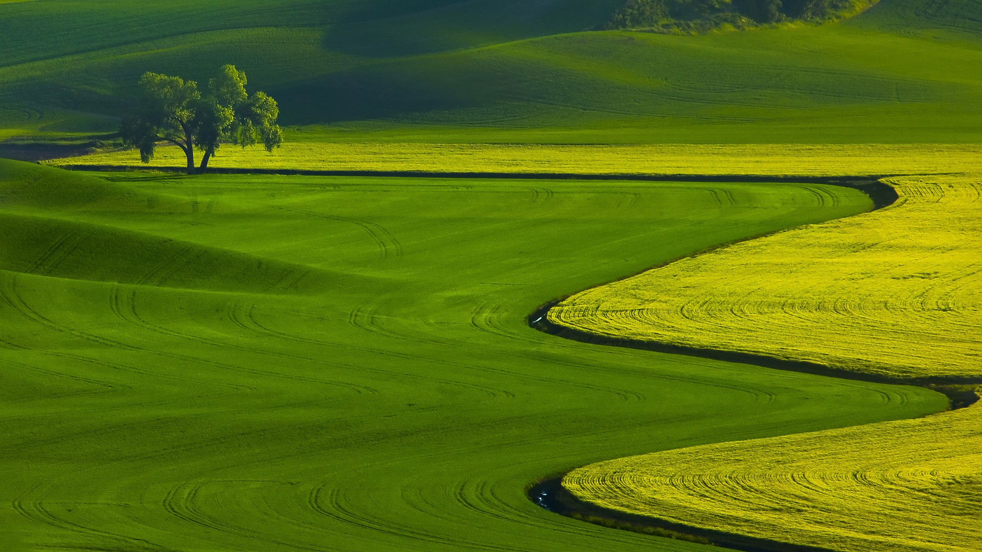 Green Landscape Wallpapers 20