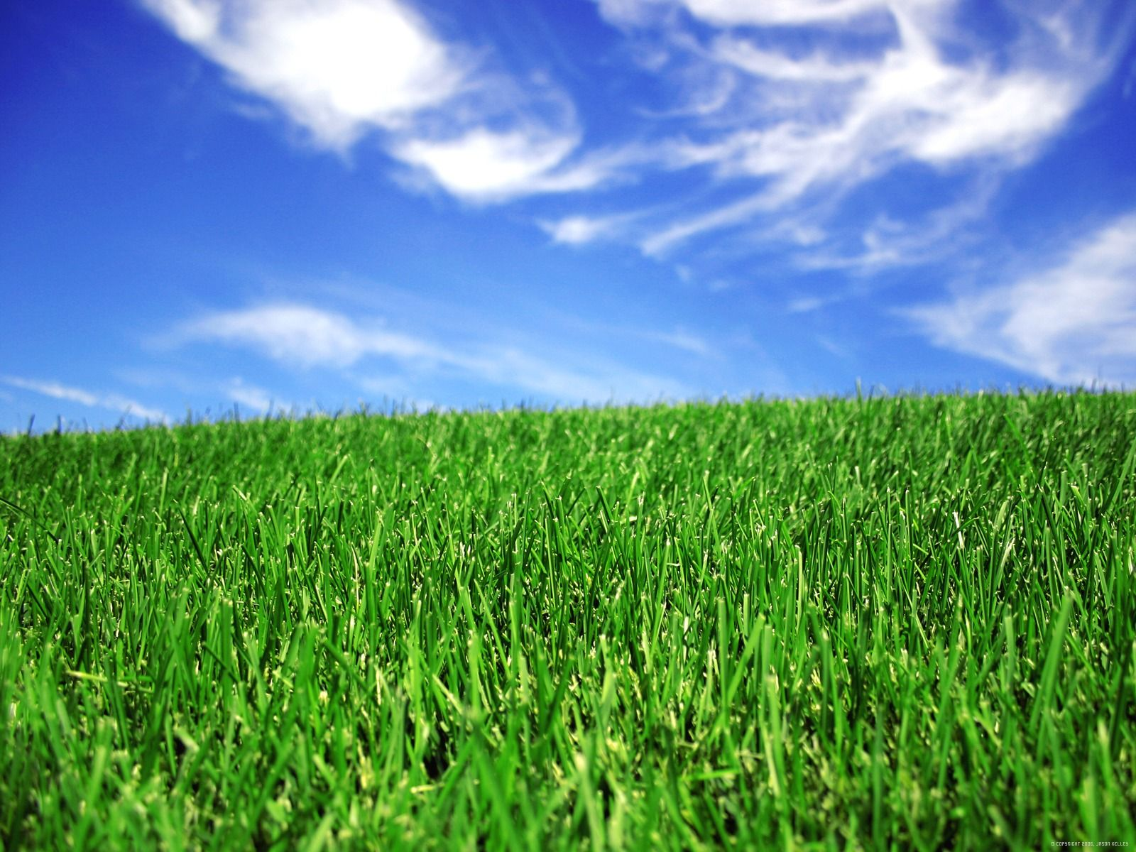 Green Lawn Tip