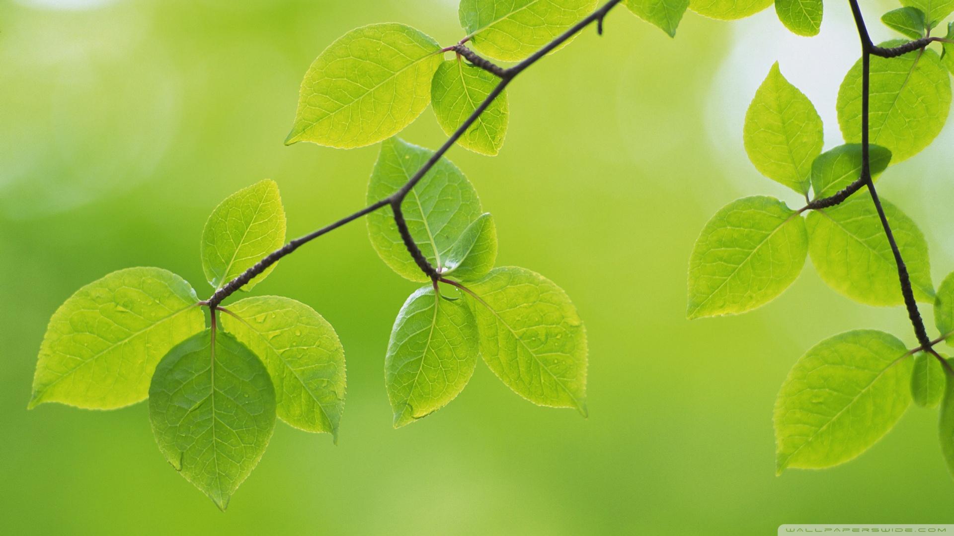 Green leaves branch