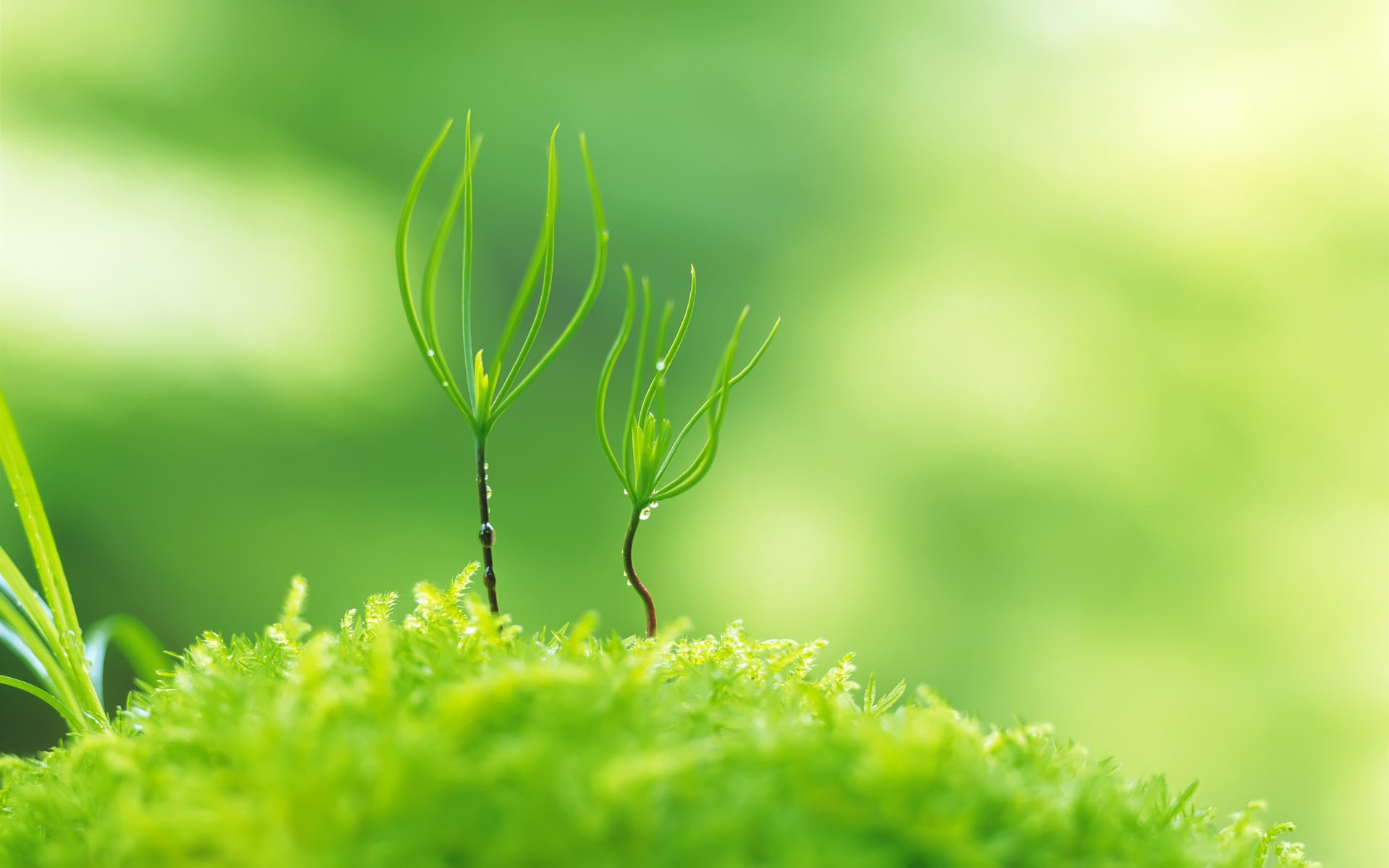 Amazing Green Plant Macro Wallpaper Background Wallpaper