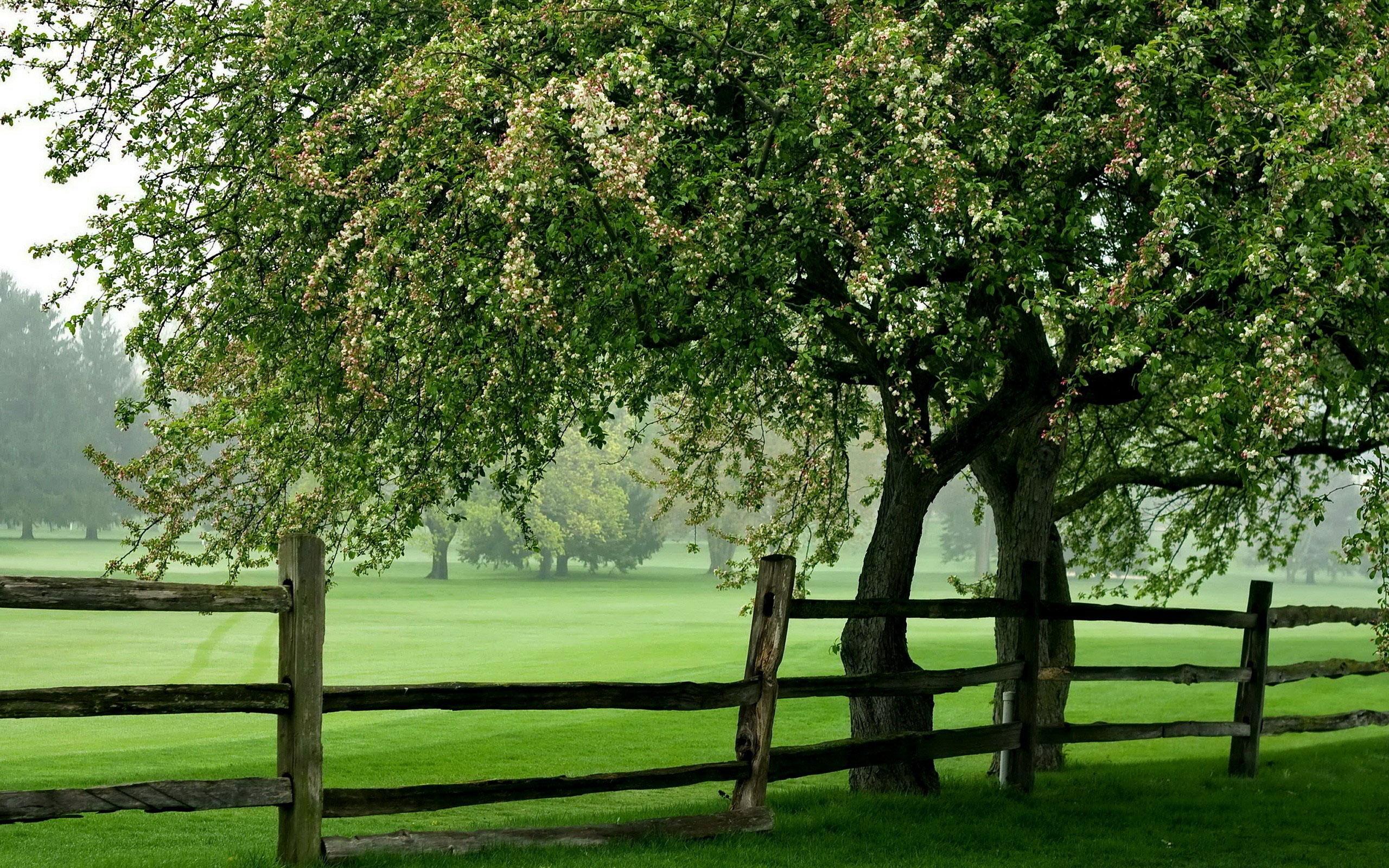 Green Meadow Tree Fence