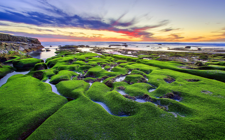 Green moss beach