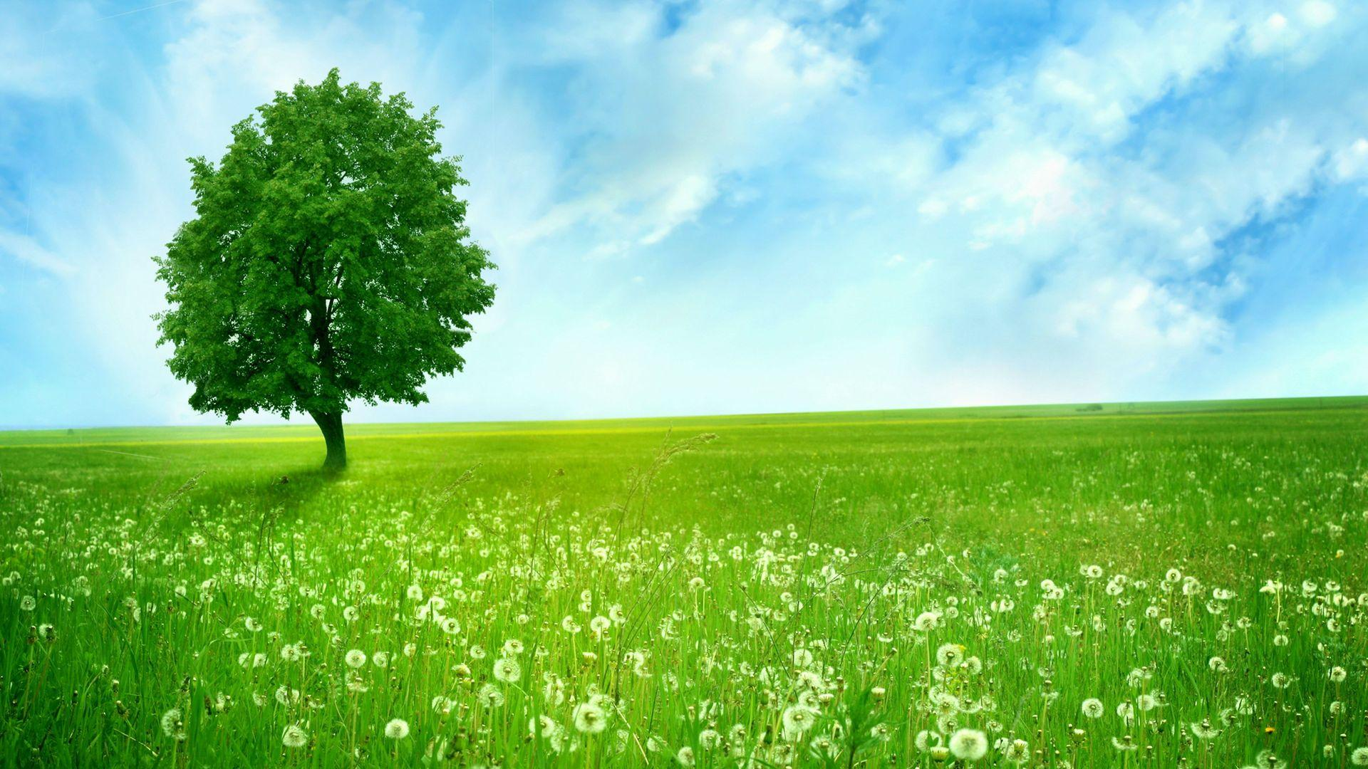 Green Nature Hd Wallpapers Fit 1920x1080px