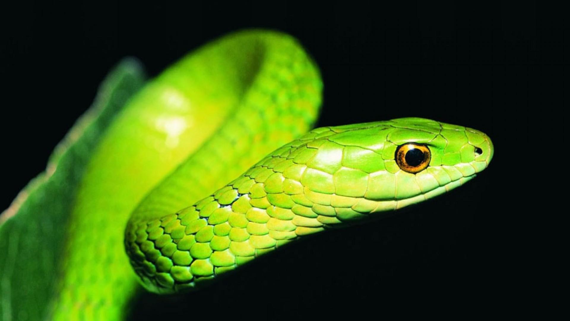 Green snake 3