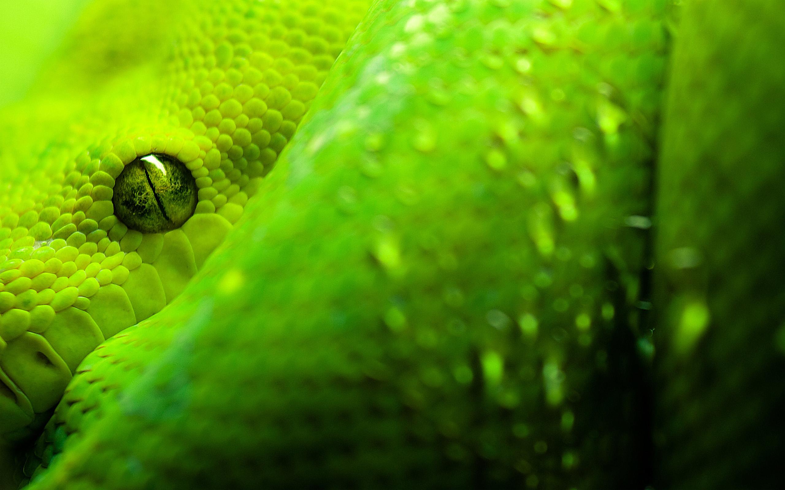 Green Snake Look