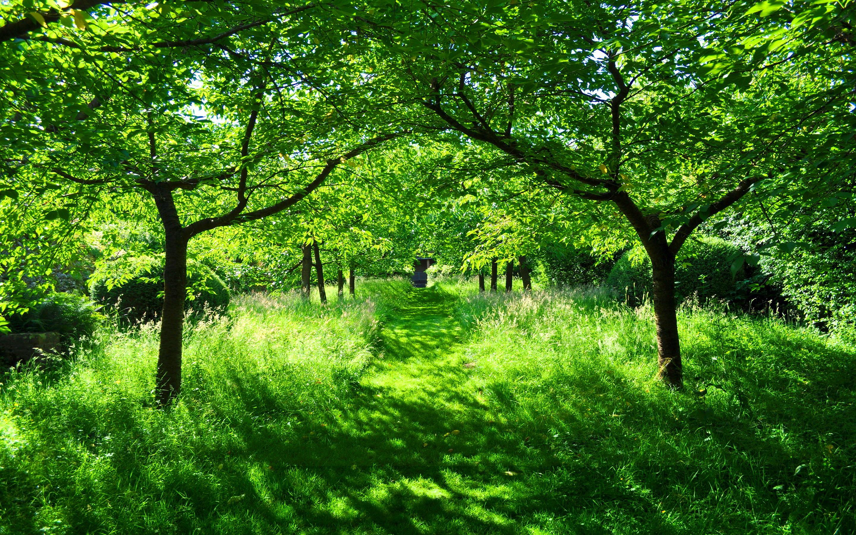 Green summer garden