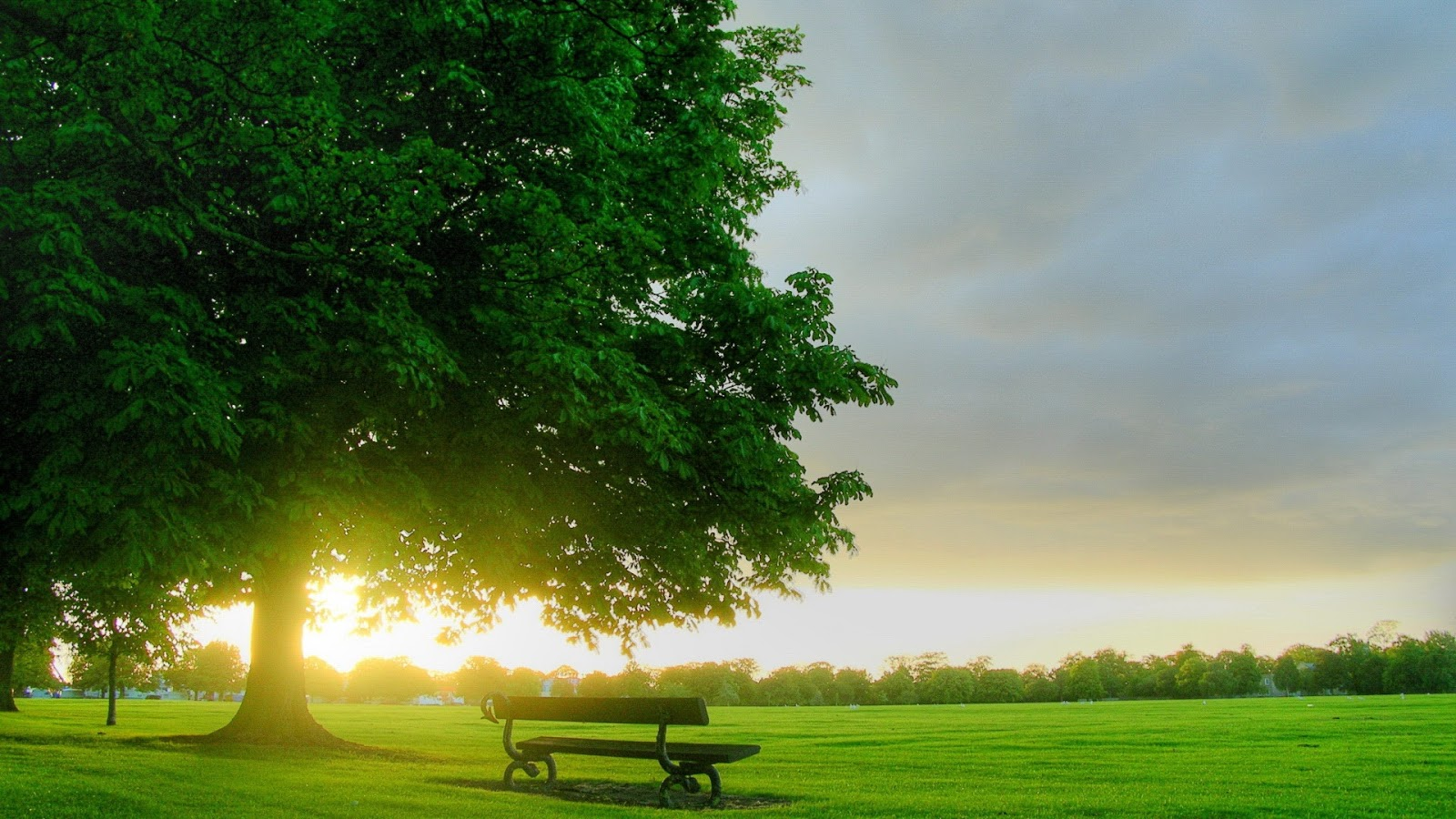 A big tree with green leaves in a grassfield with a wooden bench at sunset or dawn