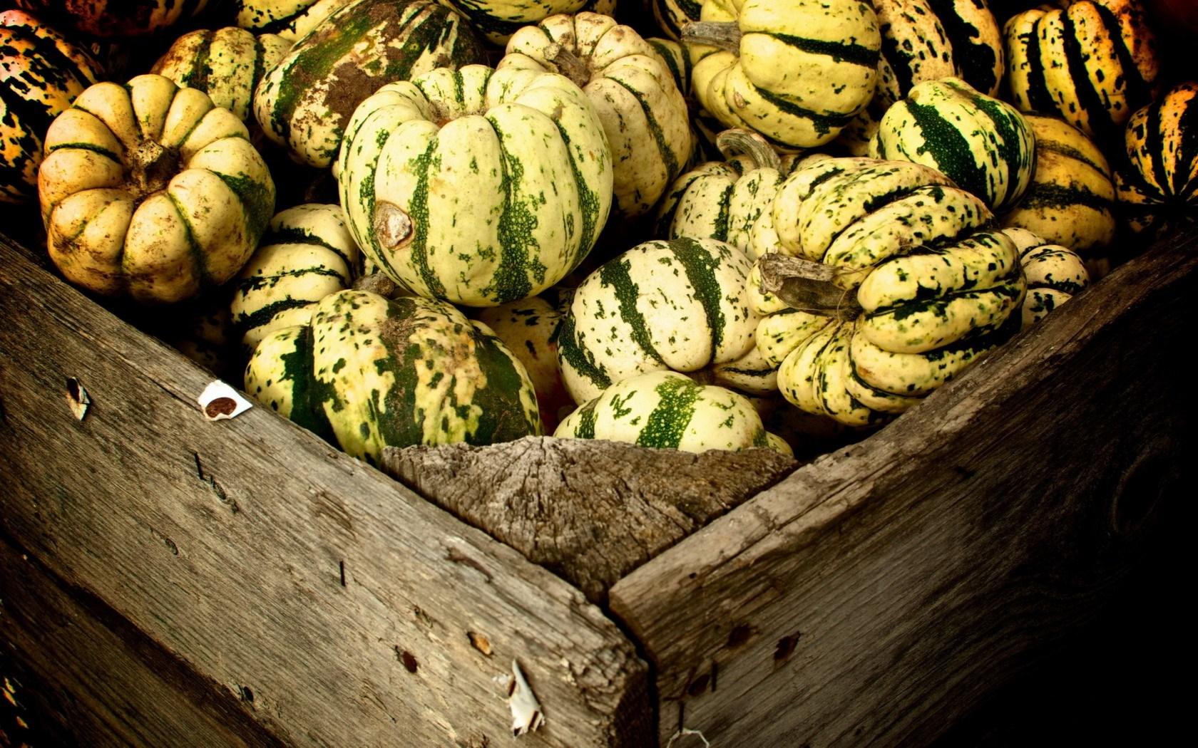 Green White Pumpkins Autumn
