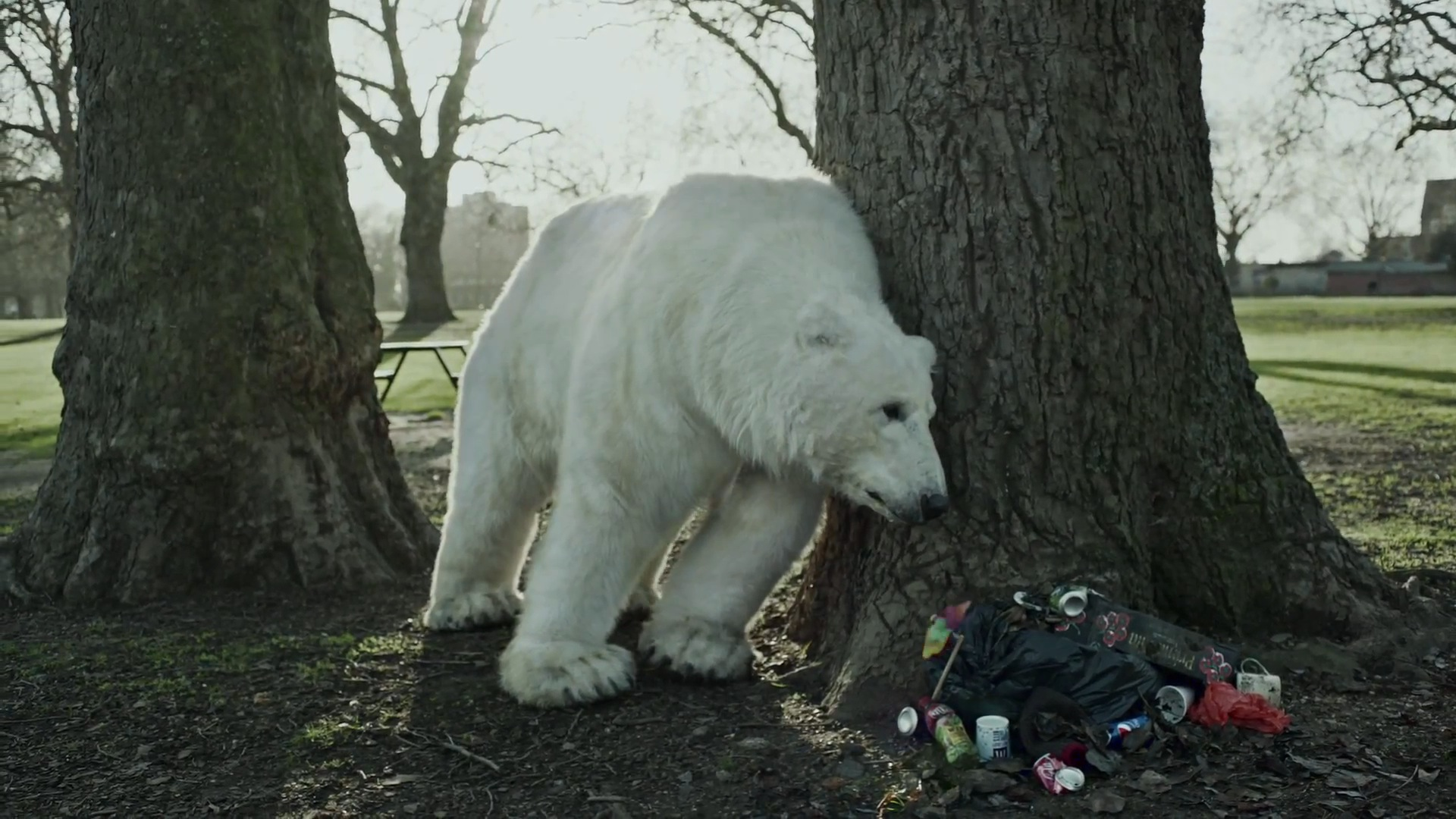 Greenpeace – Homeless Polar Bear