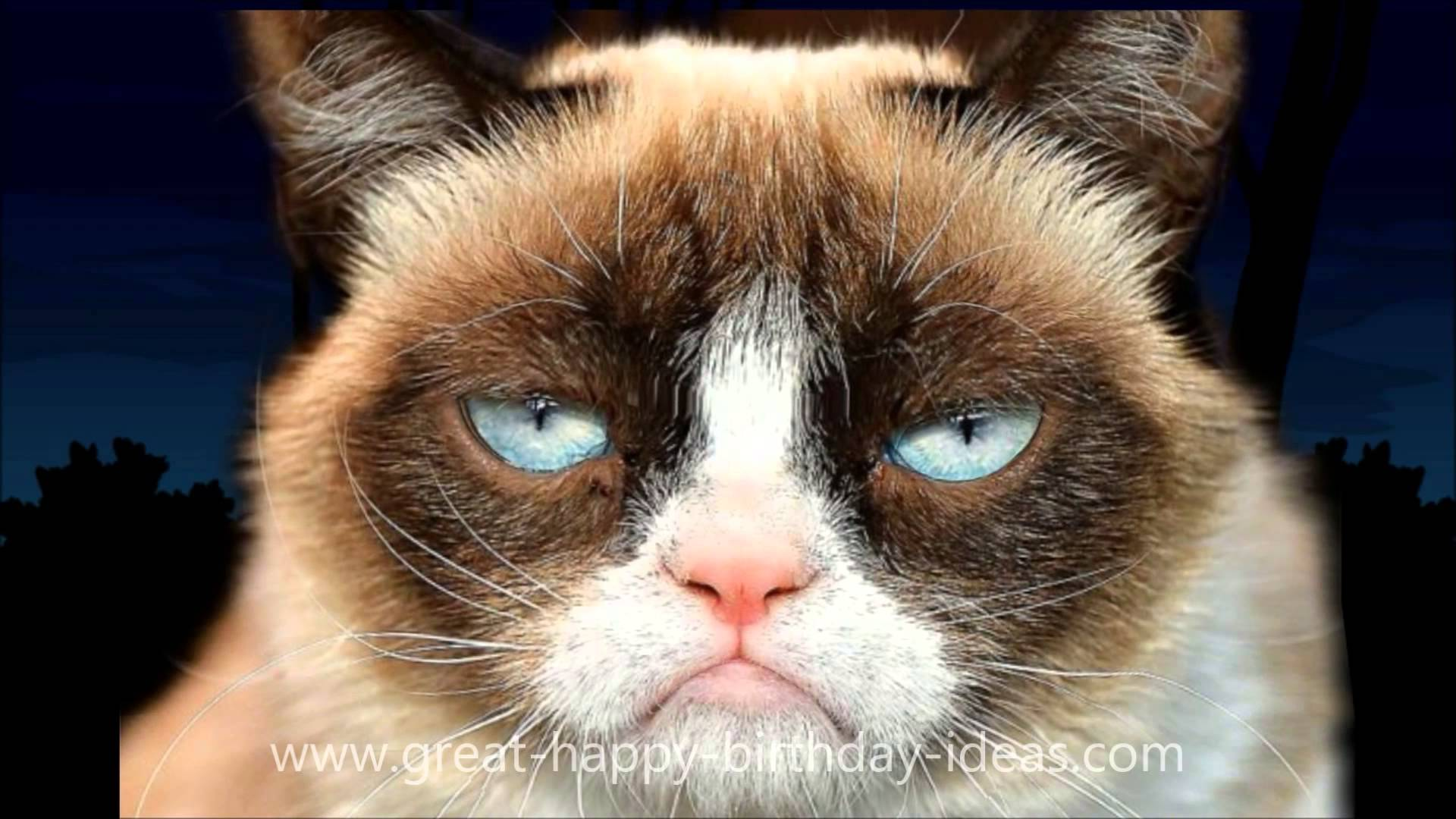 Grumpy Cat Happy Birthday Song