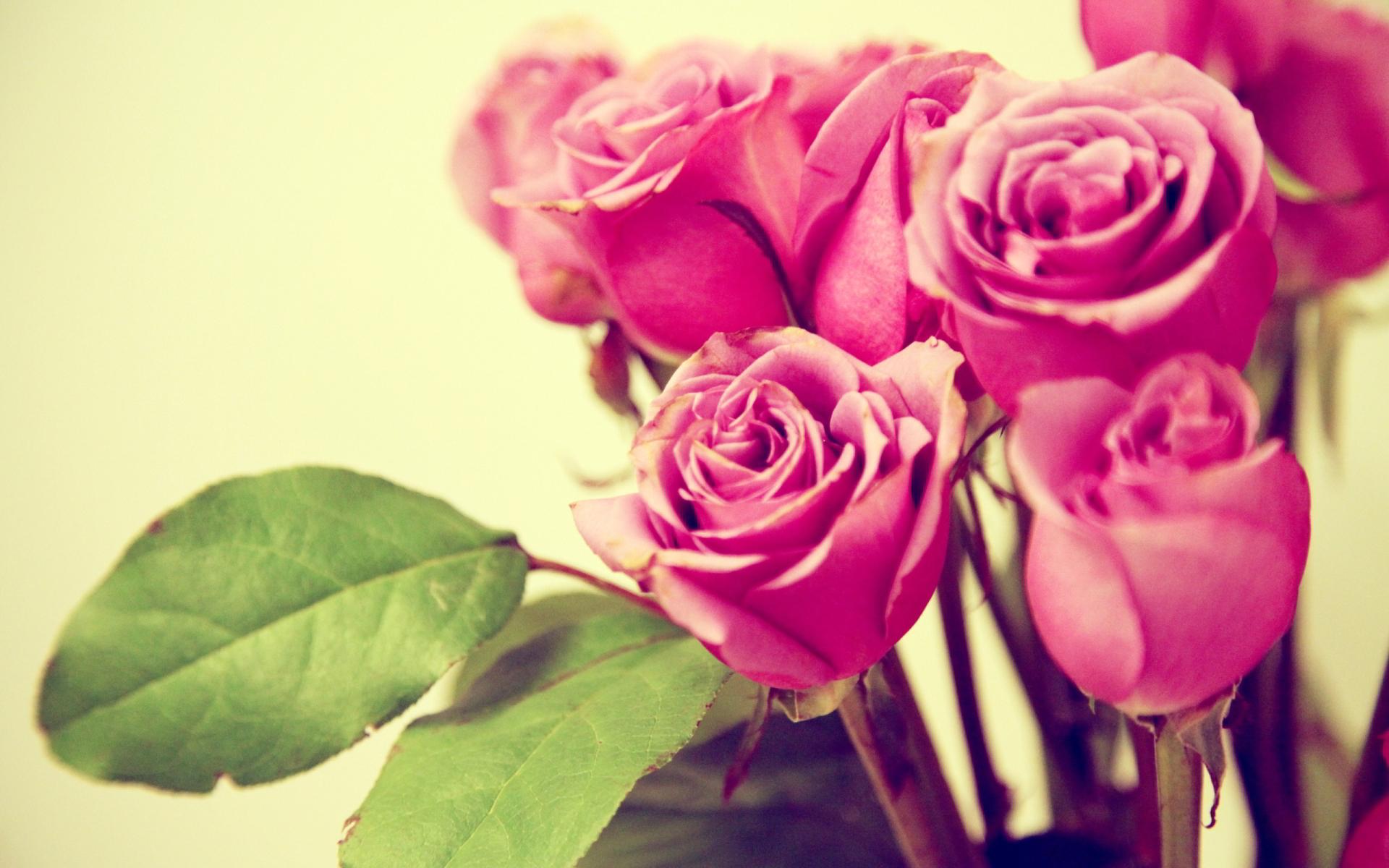 Grunge pink roses