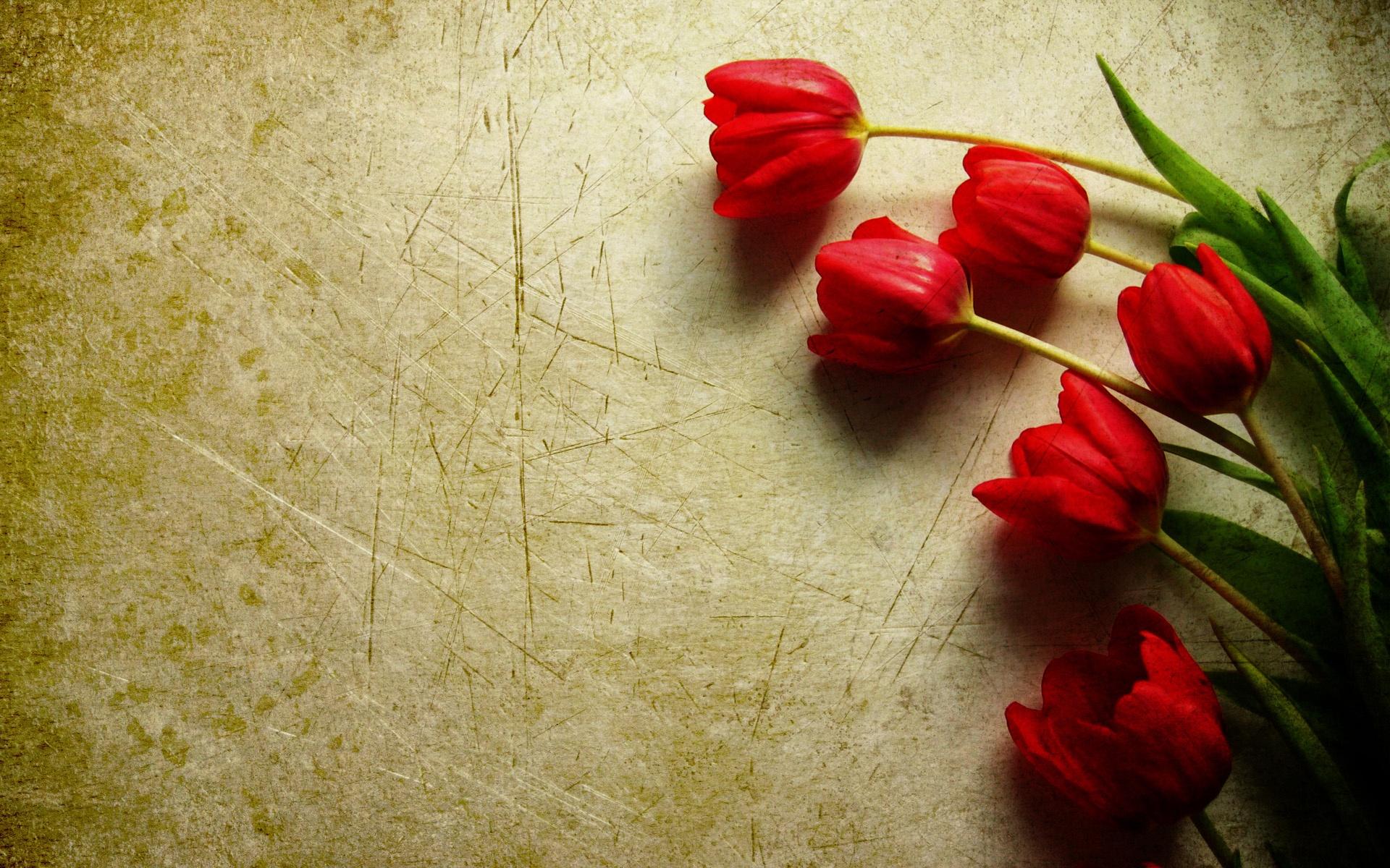 Grunge red tulips