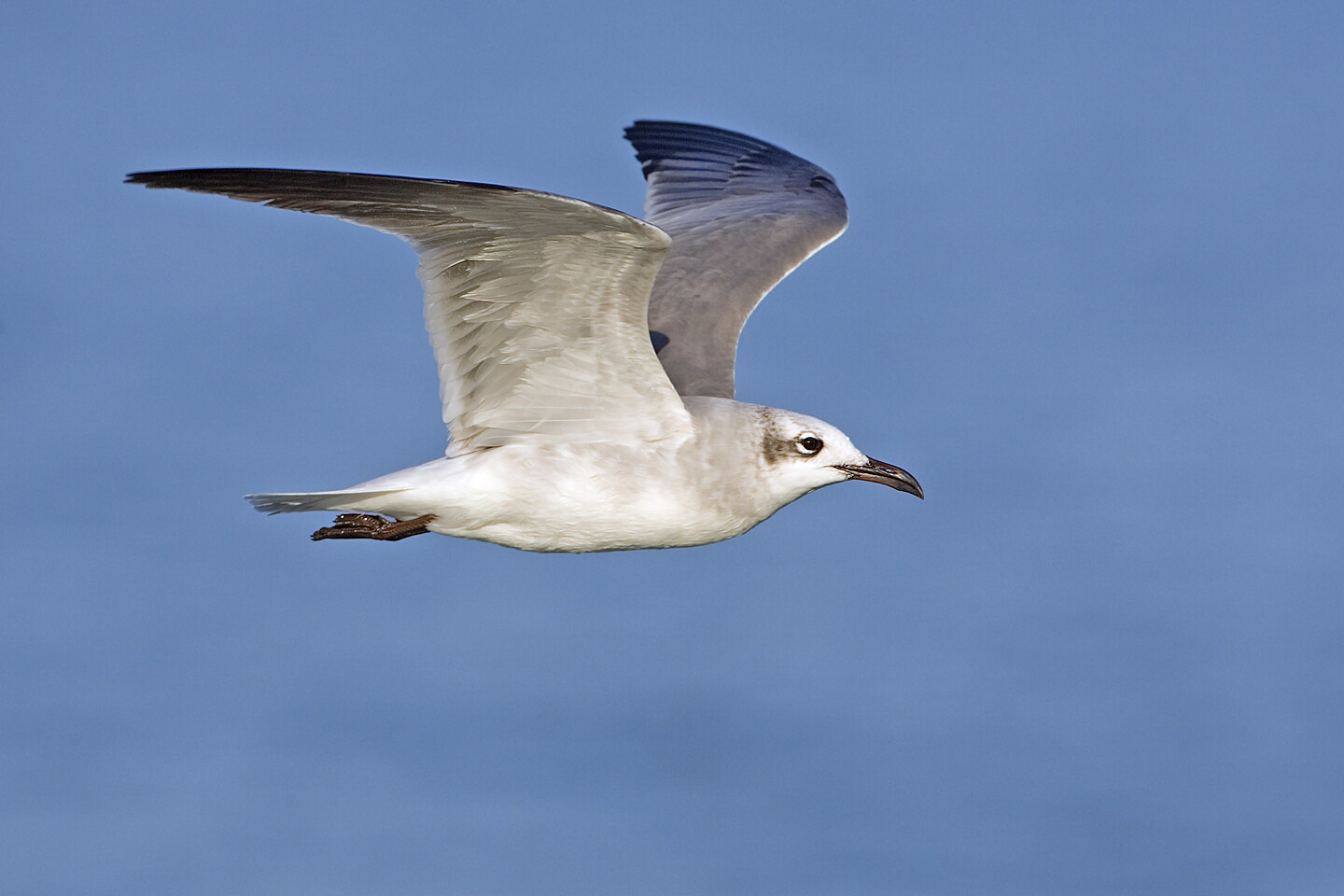Gull Pictures