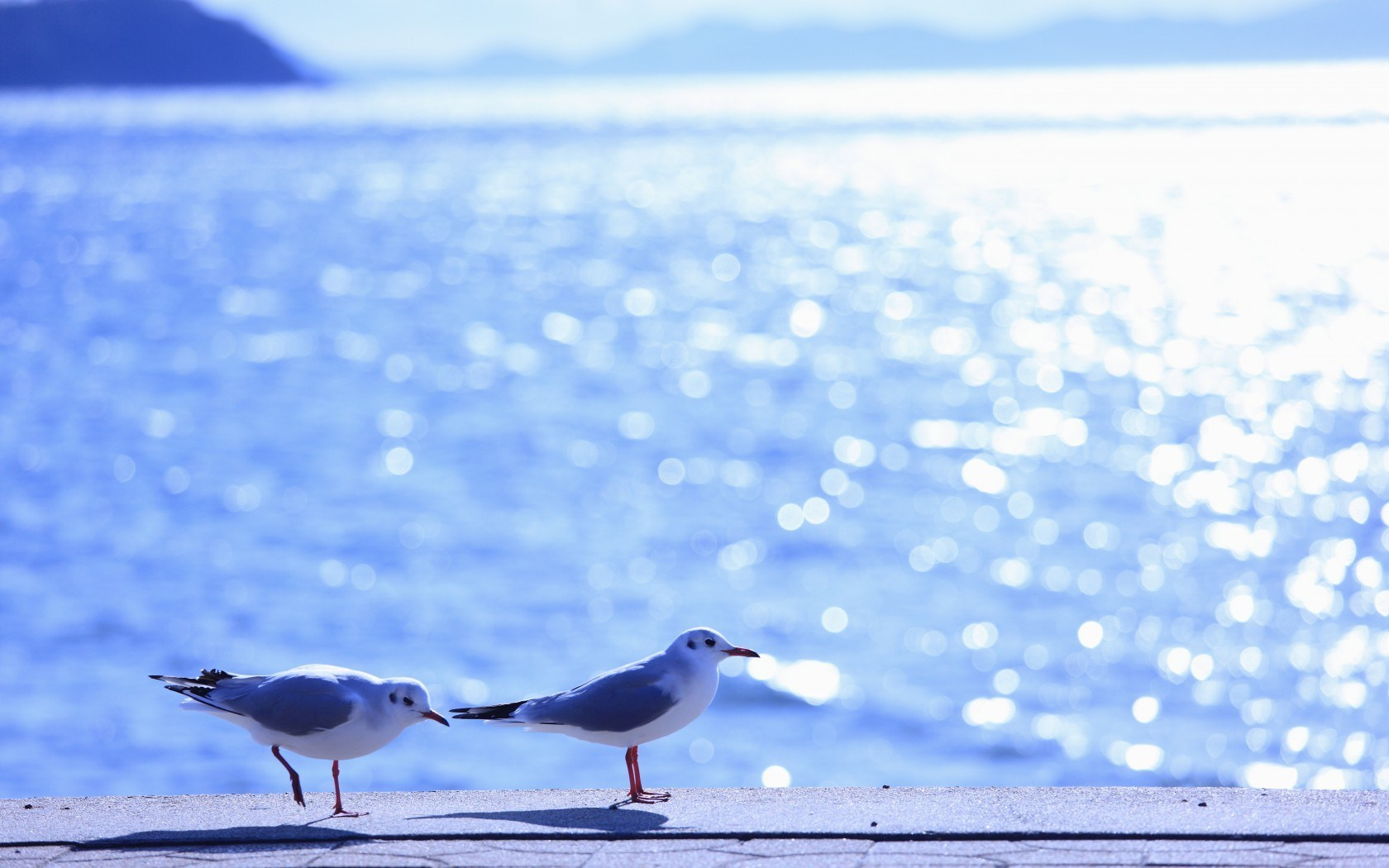 Gulls Birds Sea Waves Summer
