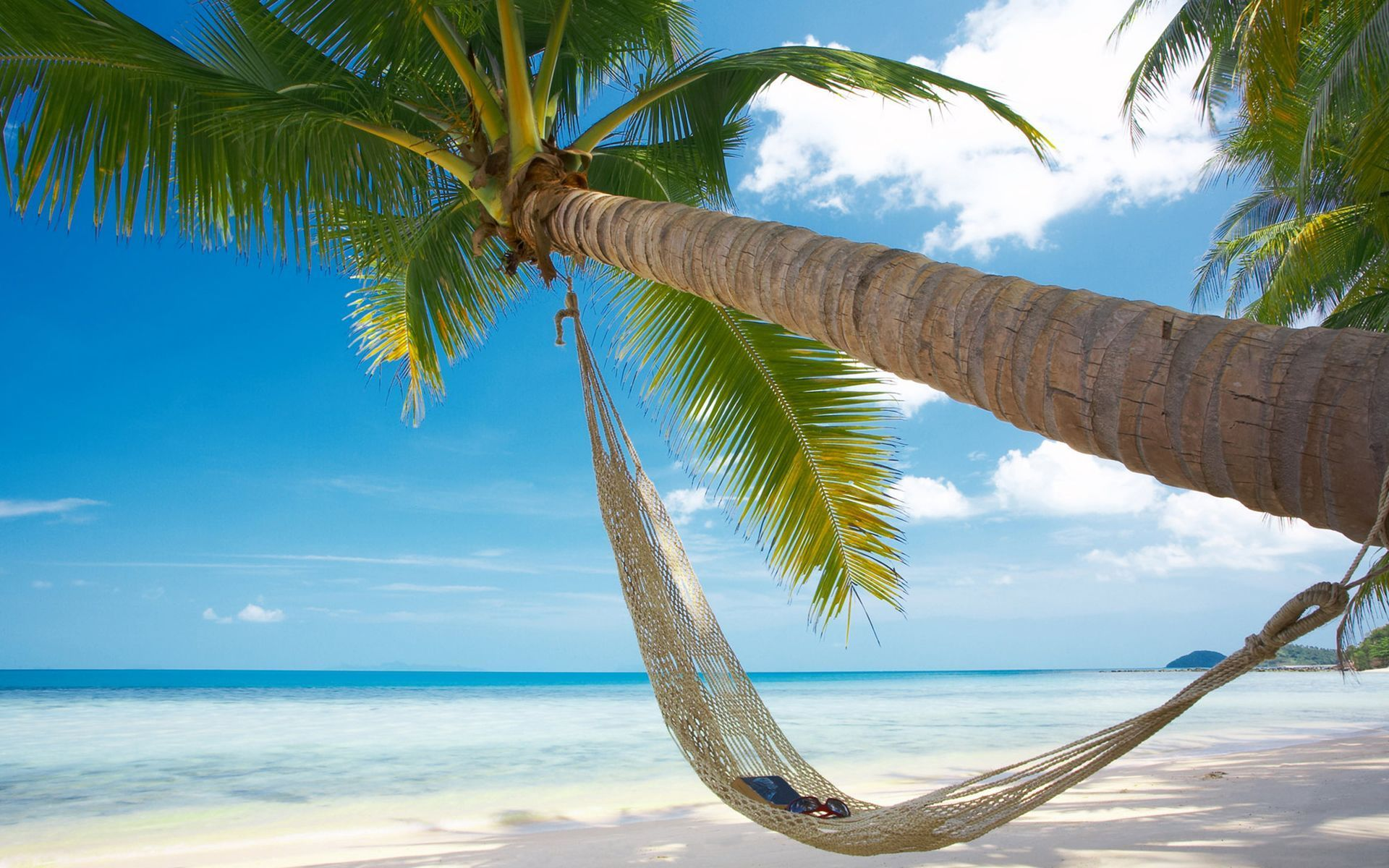 Beach palm hammock