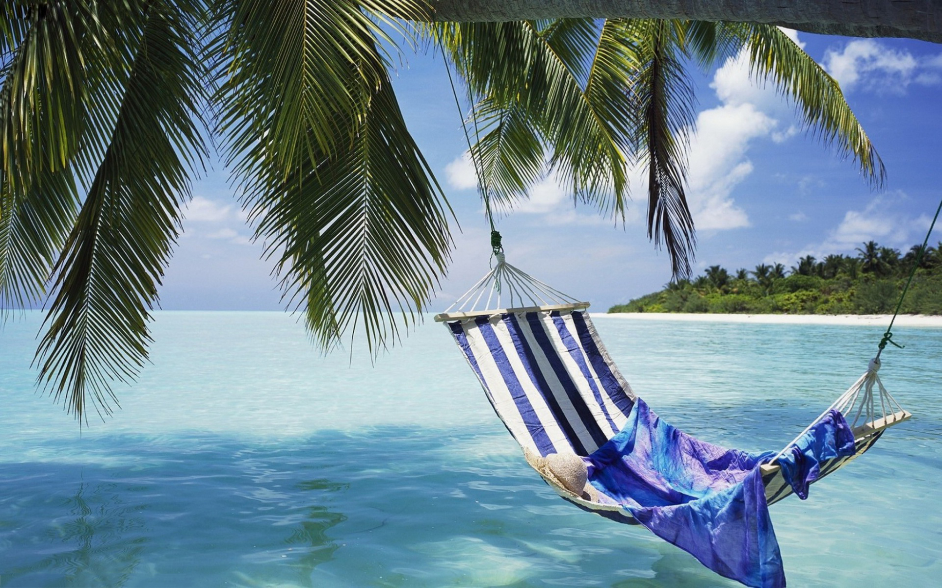 Hammock under palms